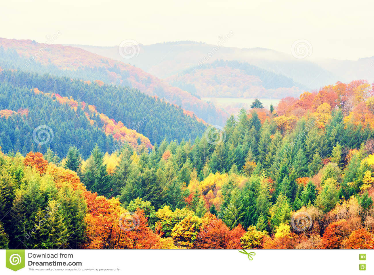 Autumn Landscape With Colorful Fall Trees. Fall Nature Backgroun ...