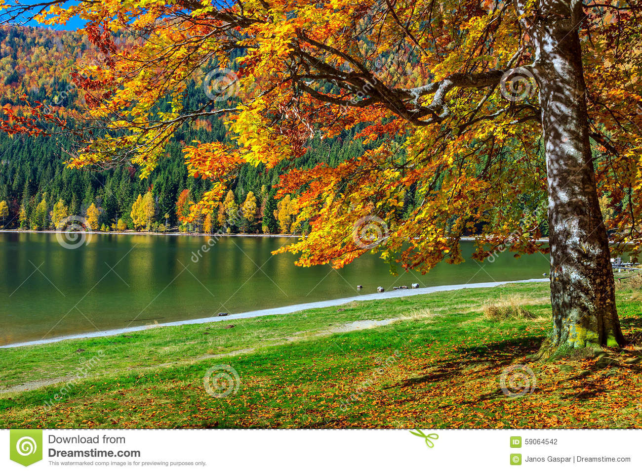 Autumn landscape with colorful forest st ana lake for Romania landscape