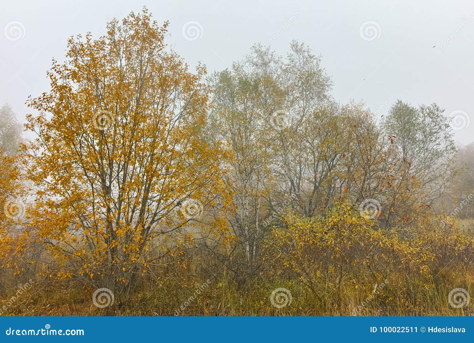 Autumn Landscape com árvores amarelas, montanha de Vitosha, Bulgária