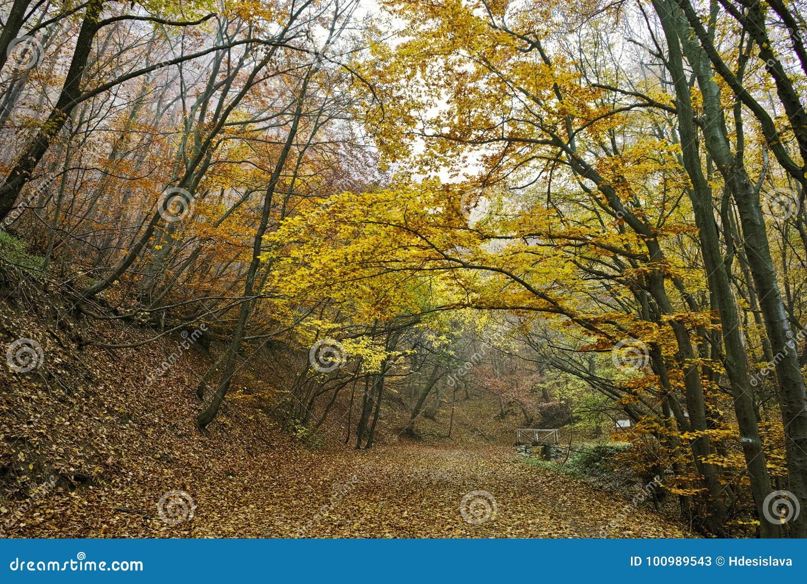 Autumn Landscape com árvores e névoa amarelas, montanha de Vitosha, Bulgária
