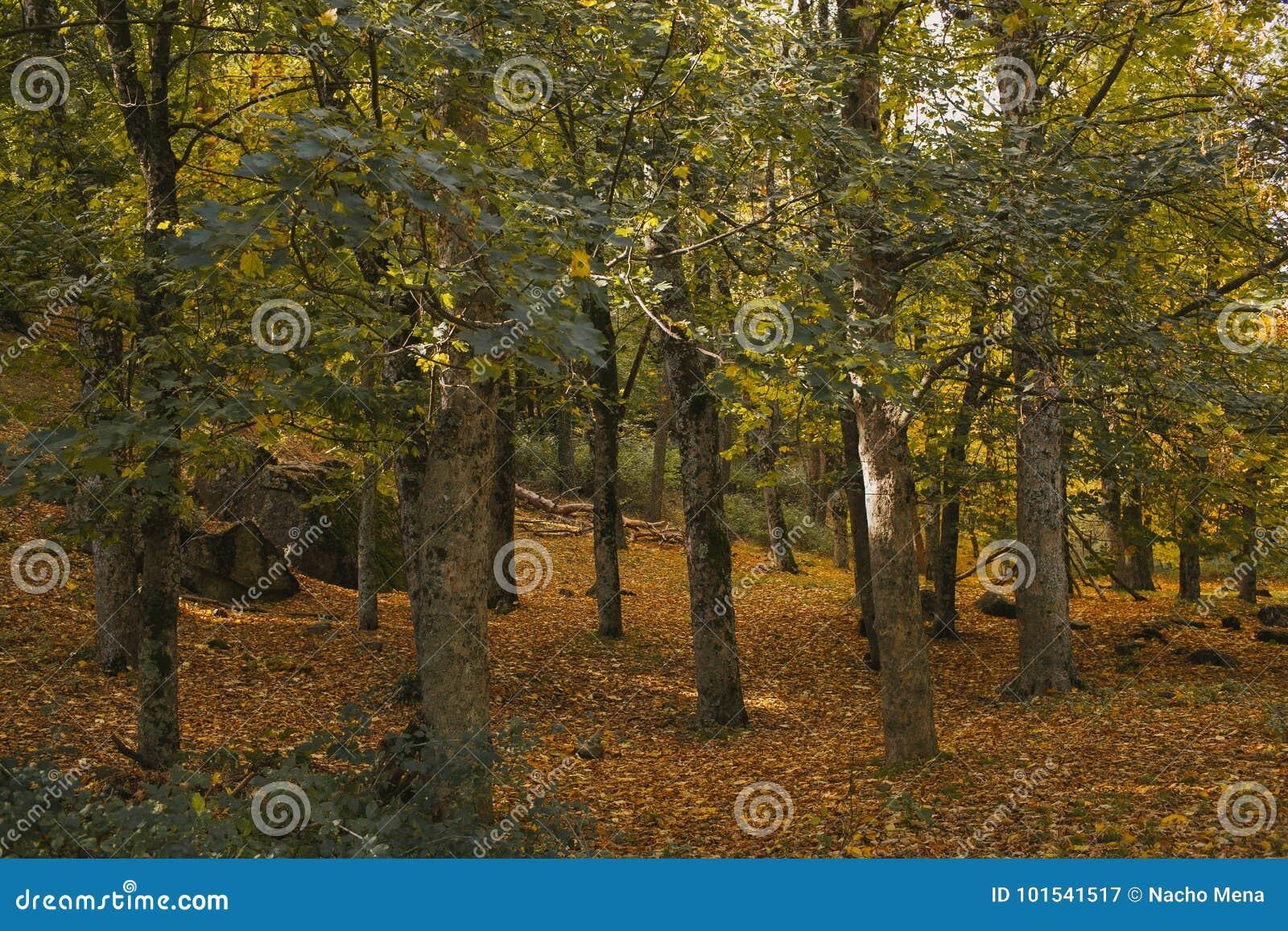 Autumn Landscape Kleurrijk de herfstbos