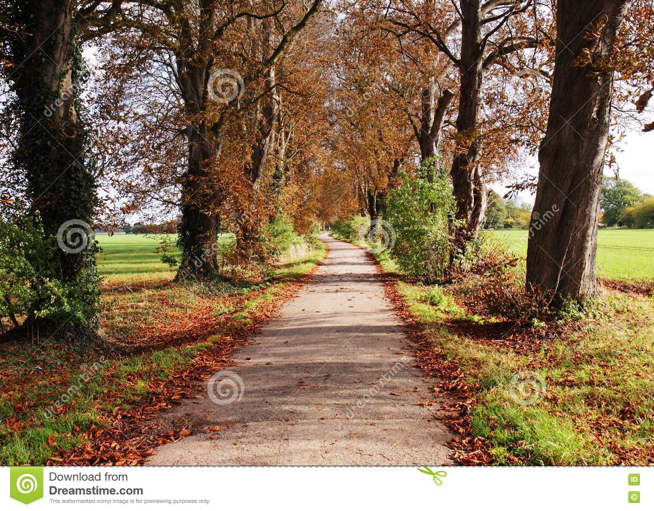 Landscaping between trees : Autumn landscape with lane between trees royalty free