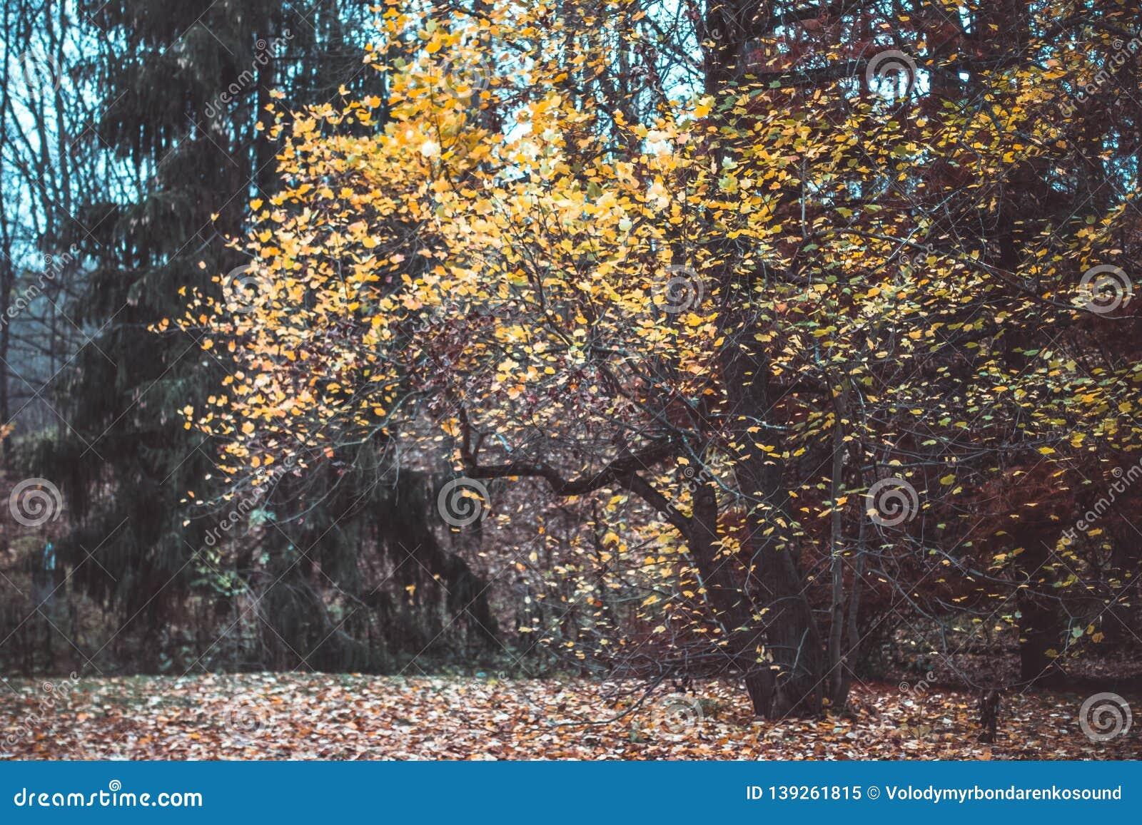 Autumn landscape in the national park Sofiivka, Uman, Ukraine. The most beautiful plases of Europe