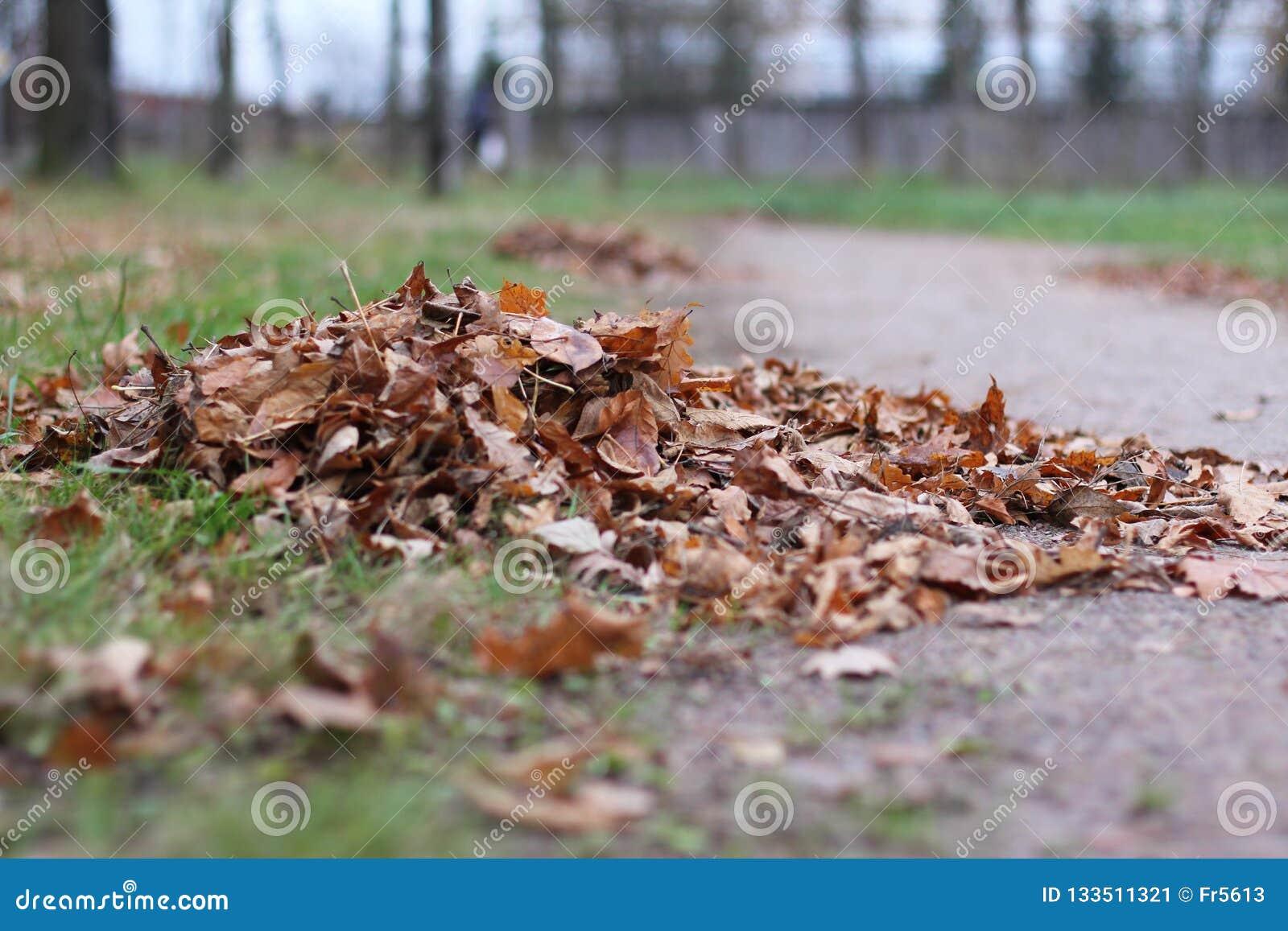 Autumn Landscape Pilha das folhas caídas