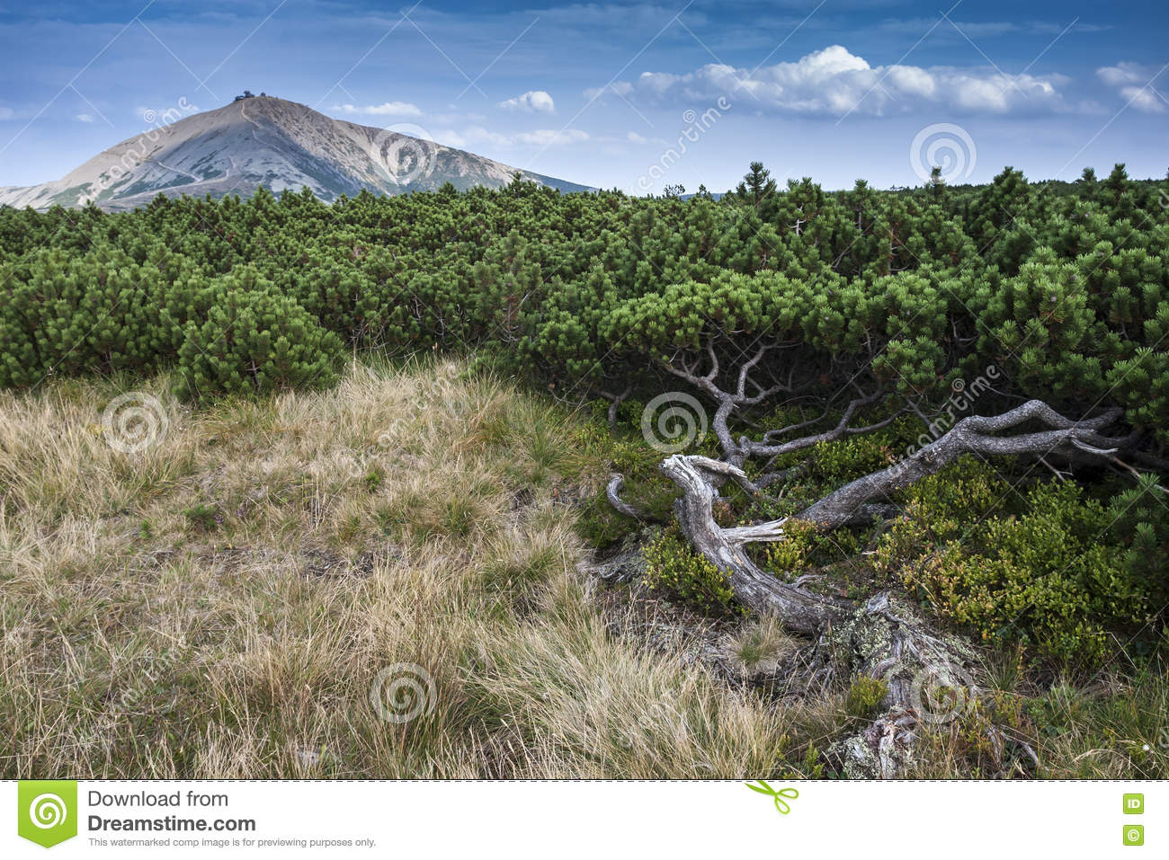 Autumn Landscape with Plants and Mountain