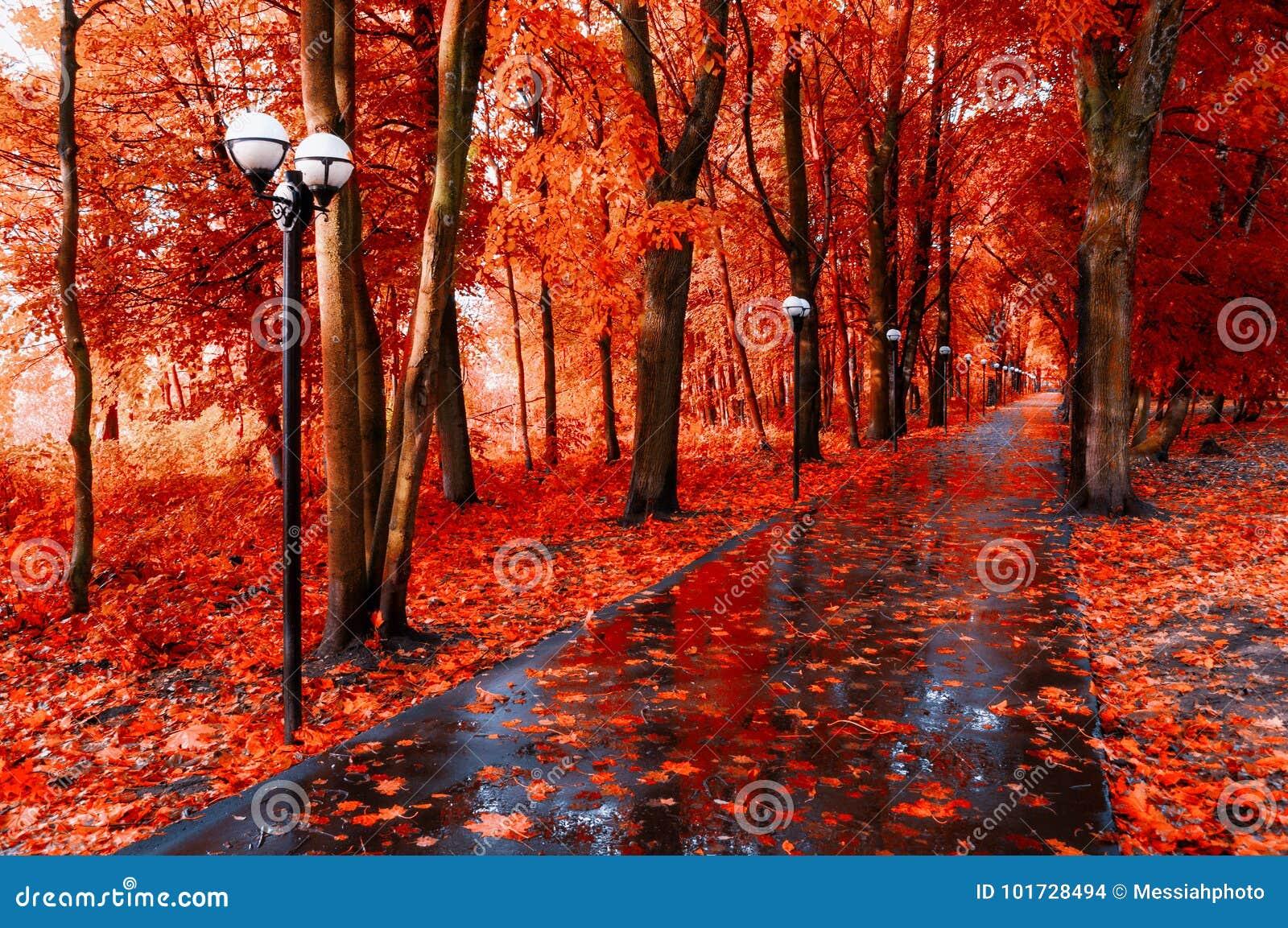 Autumn Landscape Rote Herbstbäume und gefallener Herbstlaub auf dem nassen Fußweg in der Parkgasse nach Regen
