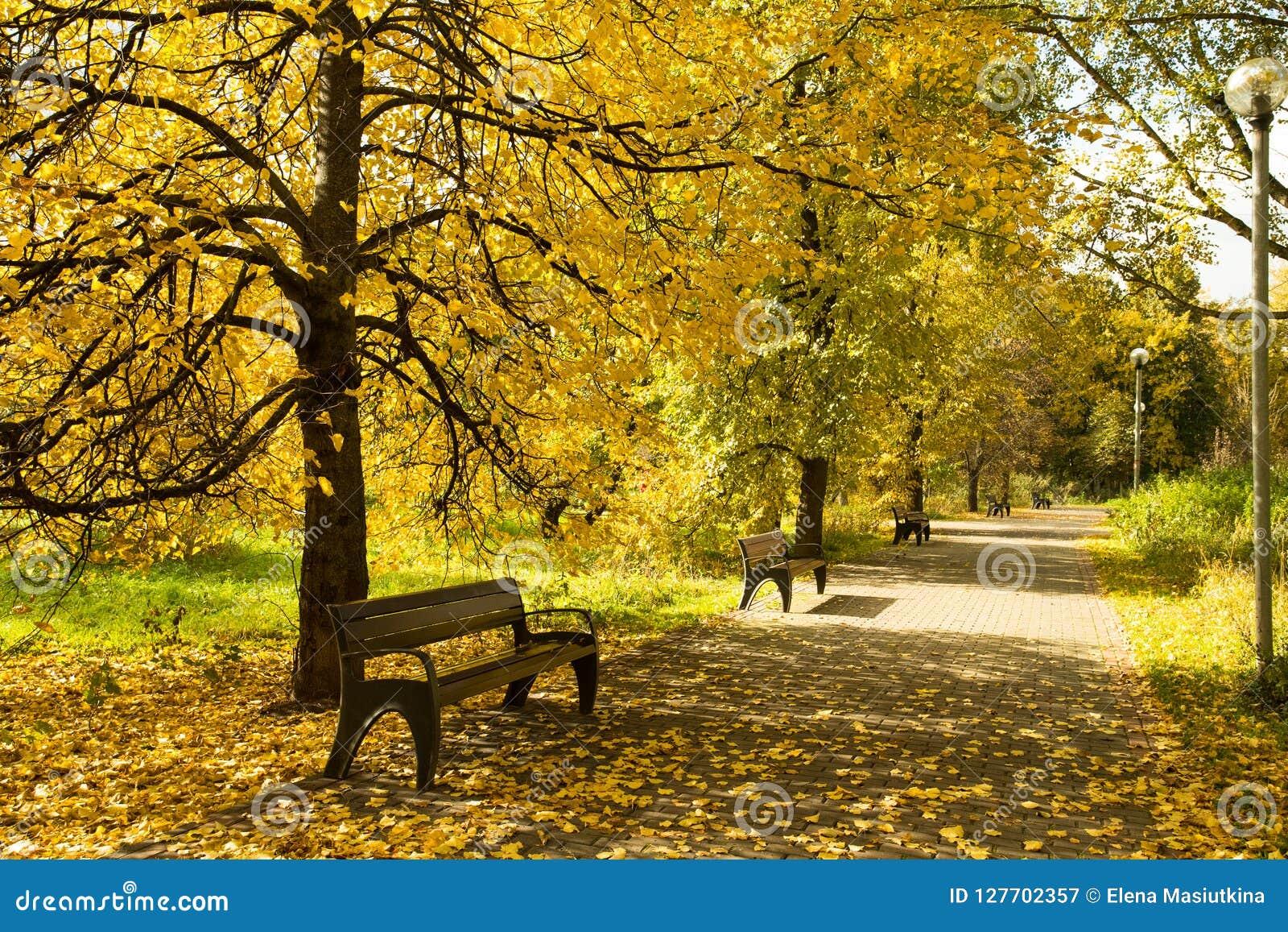 Autumn Landscape With Wooden Benches sous des arbres avec Lea jaune