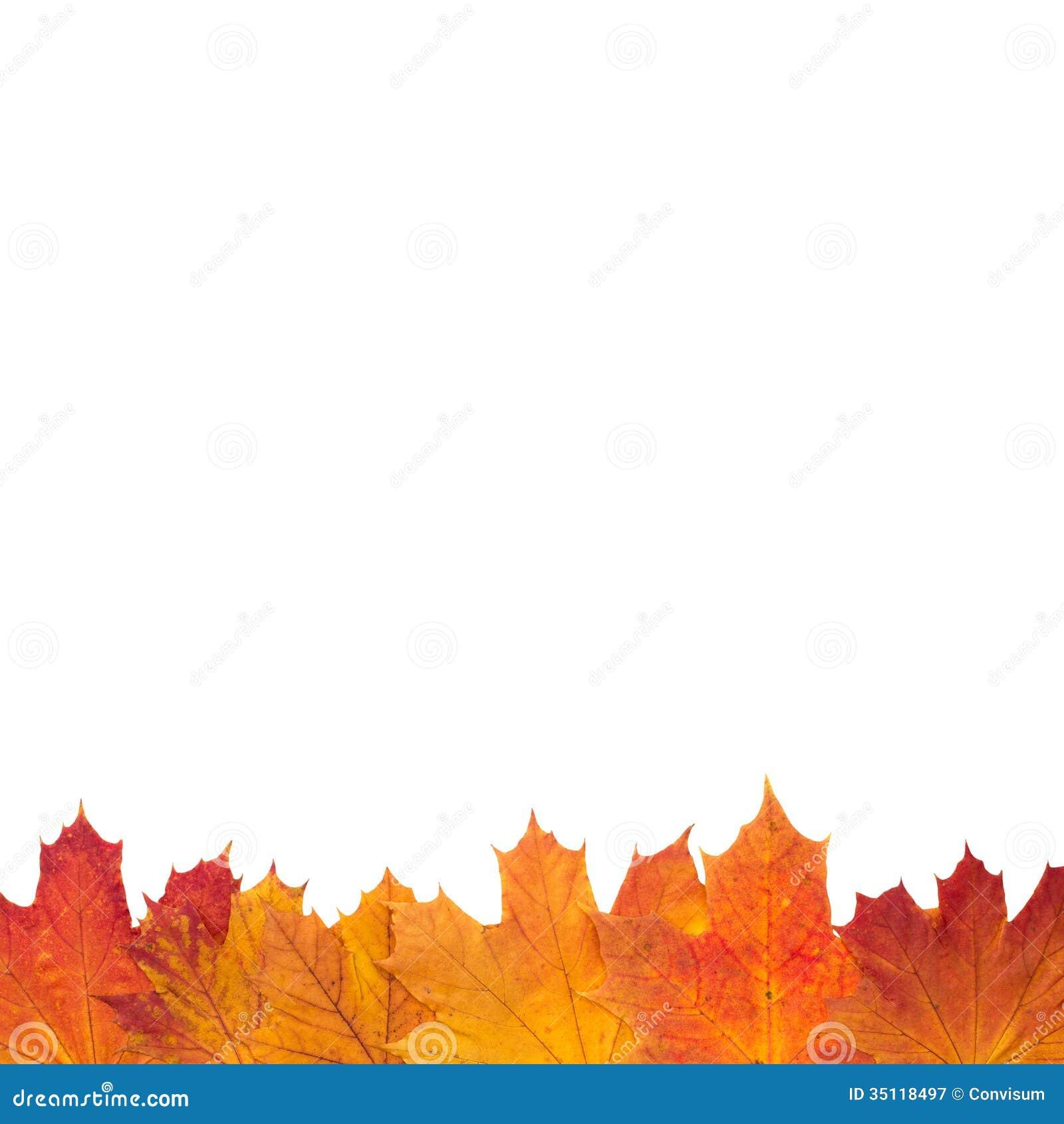 autumn leaf border stock image image of border foliage 35118497
