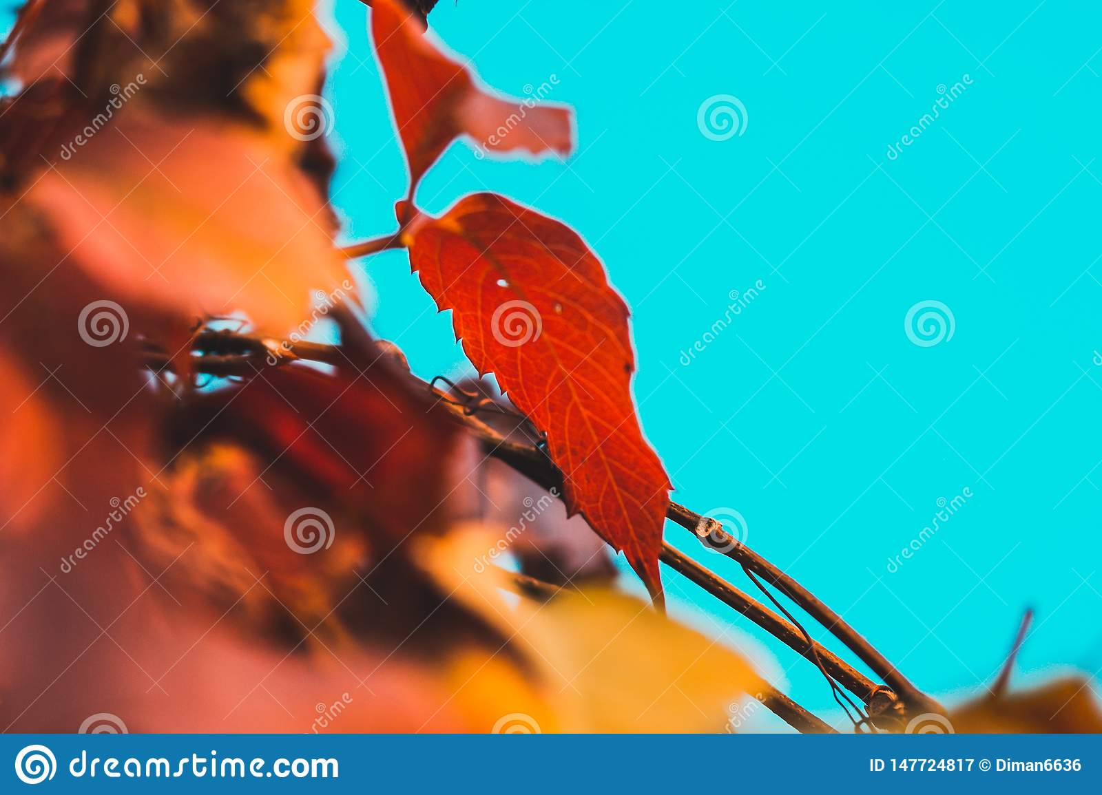 Autumn leaf on a branch on a sky background