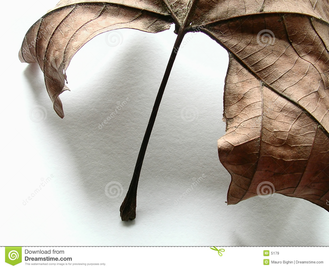 Autumn leaf, detail