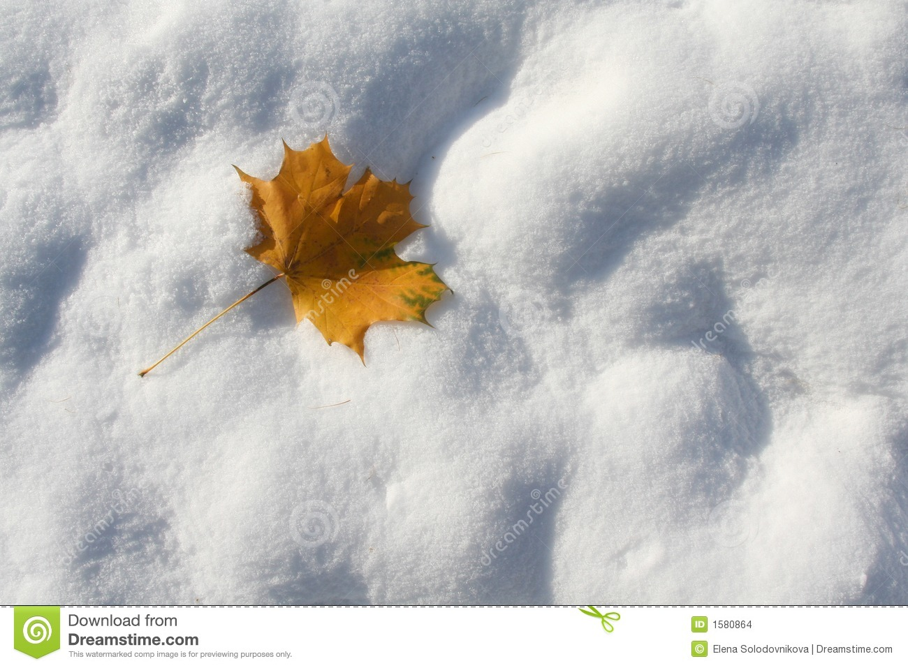 Autumn leaf on the first snow