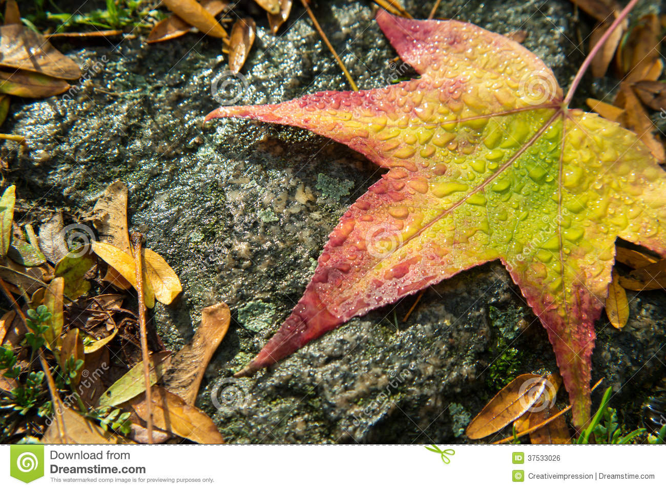 Autumn Leaf And Raindrops Royalty Free Stock Image - Image ...