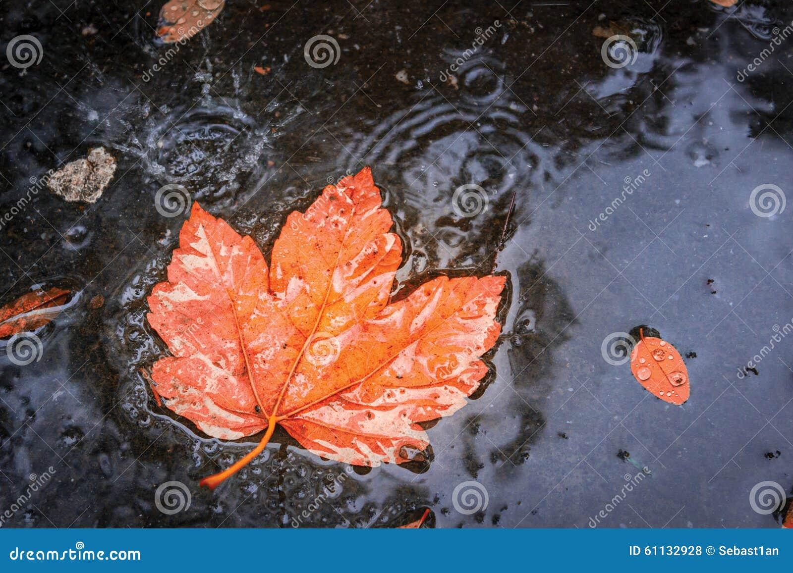 Autumn Leaf in Regen