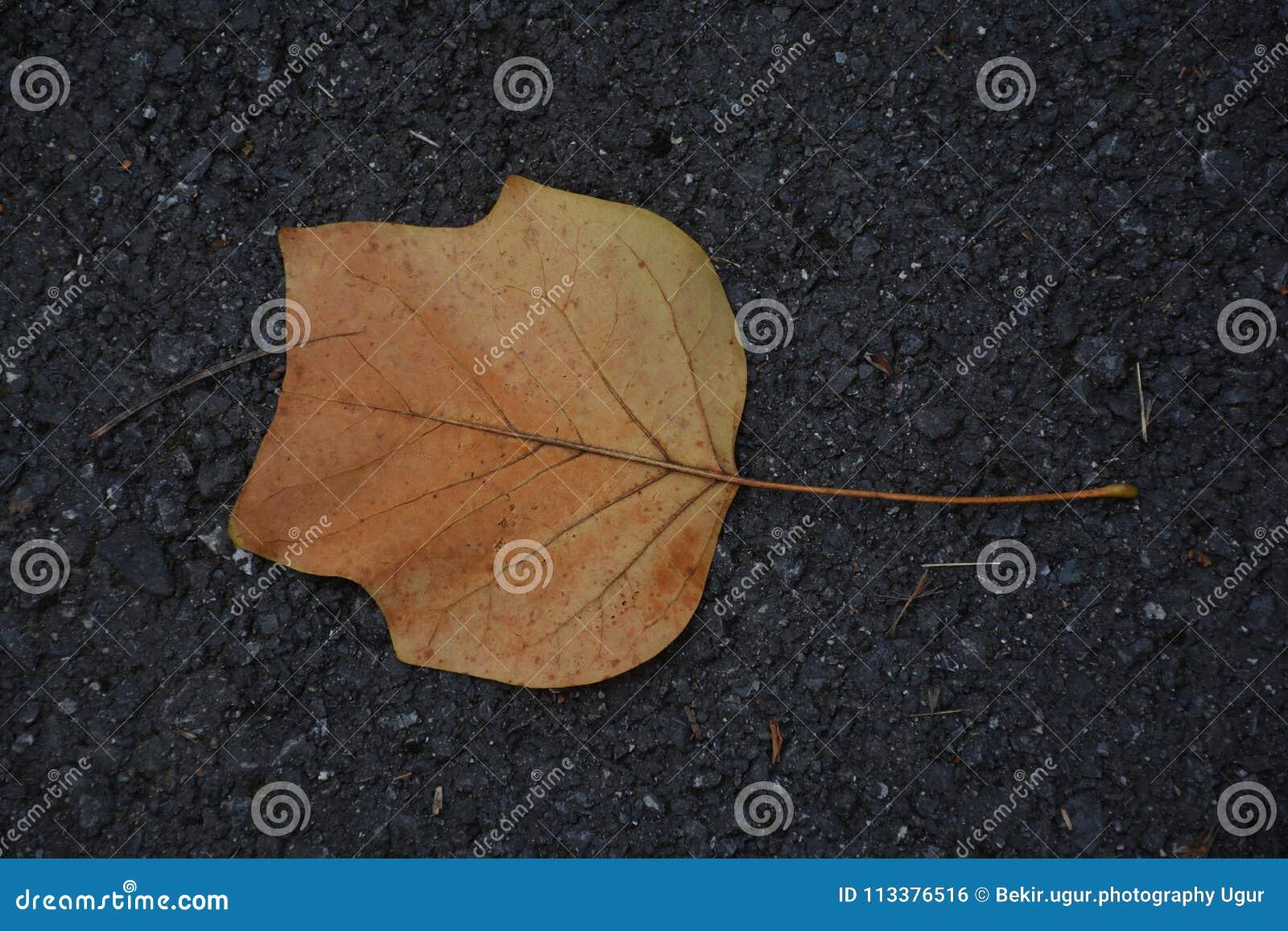 Leaf on the ground stock photo. Image of autumn, garden - 113376516