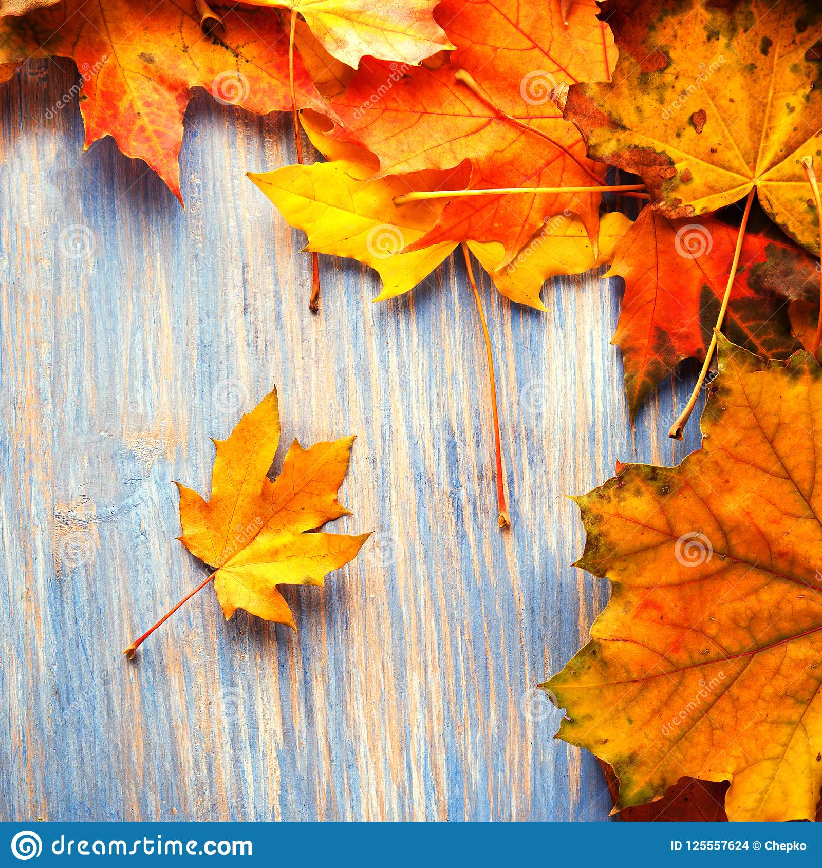 Download Autumn Leaf On Blue Wood Background Top View Stock Photo - Image of decoration, backgrounds: 125557624