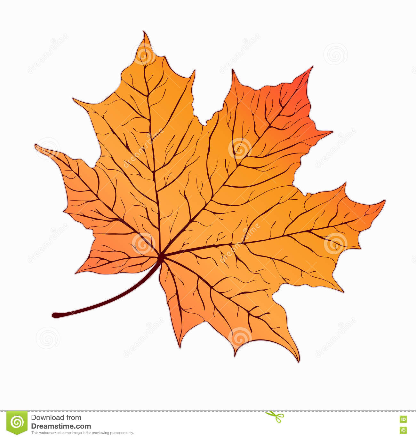 Autumn Leaf. Yellow Orange Maple . Hand-drawing, Vector