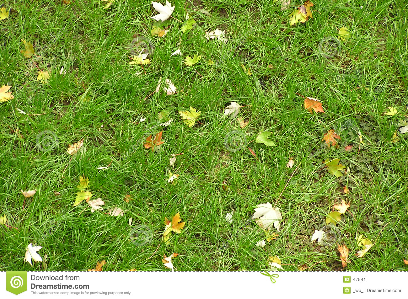 Download Autumn leaves stock image. Image of october, november, playground - 47541