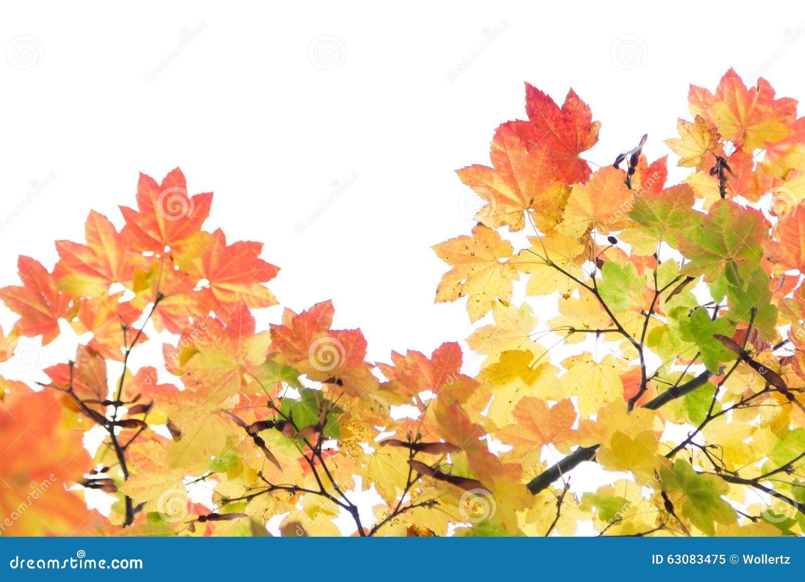 Download Autumn Leaves image stock. Image du vert, detail, érable - 63083475