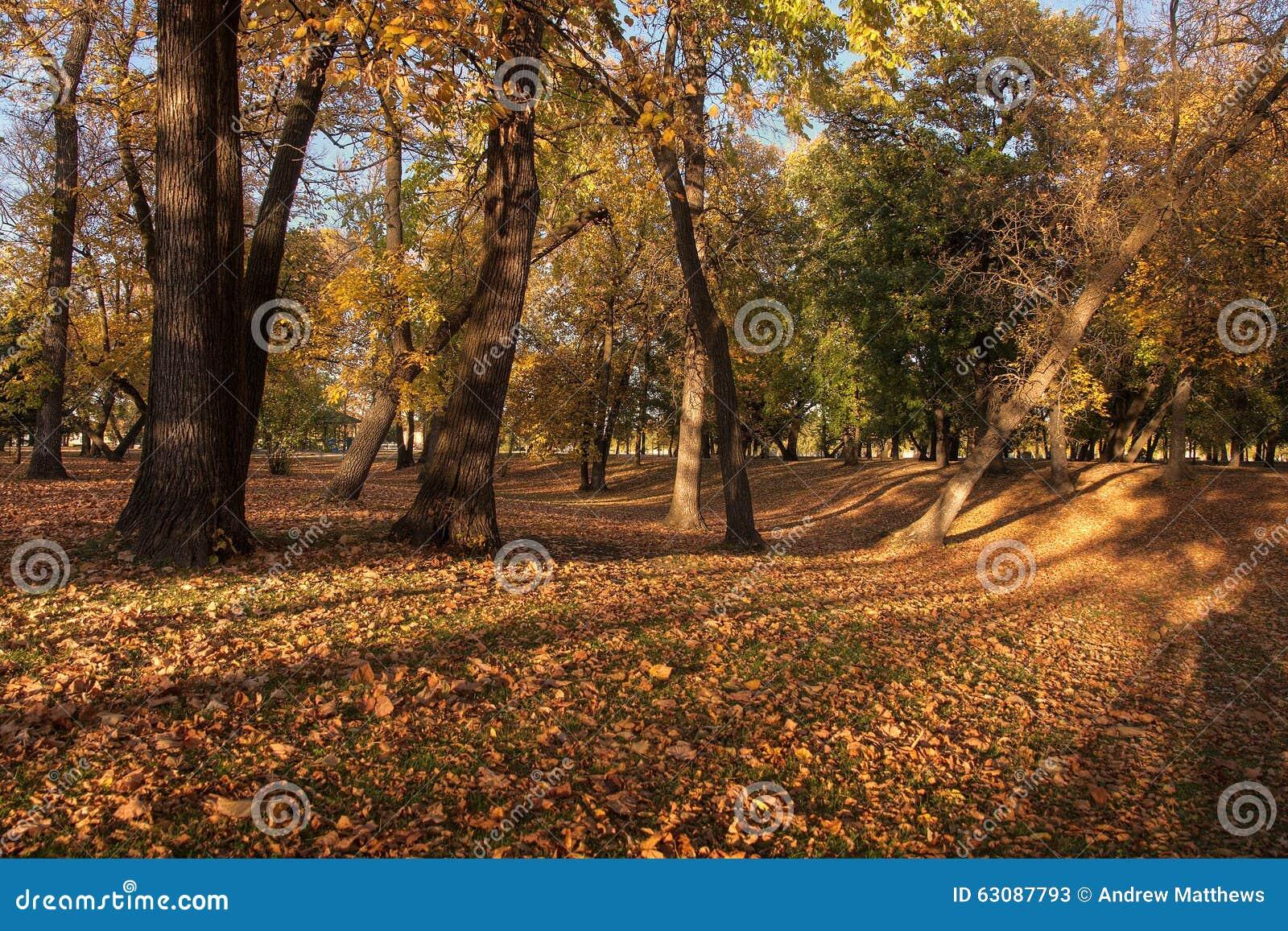 Download Autumn Leaves image stock. Image du course, stationnement - 63087793