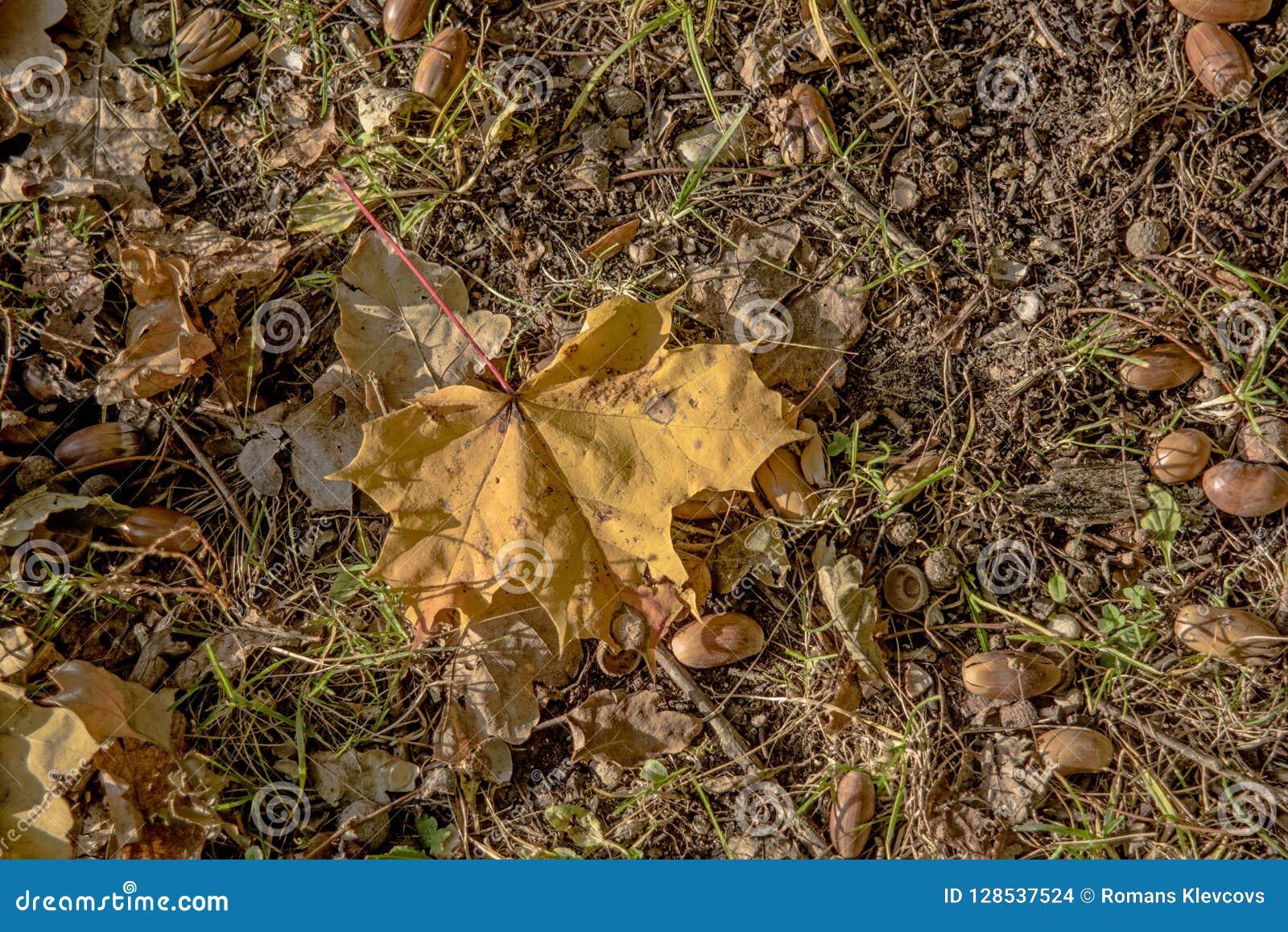 Autumn leaves and acorn. Abstract autumn texture