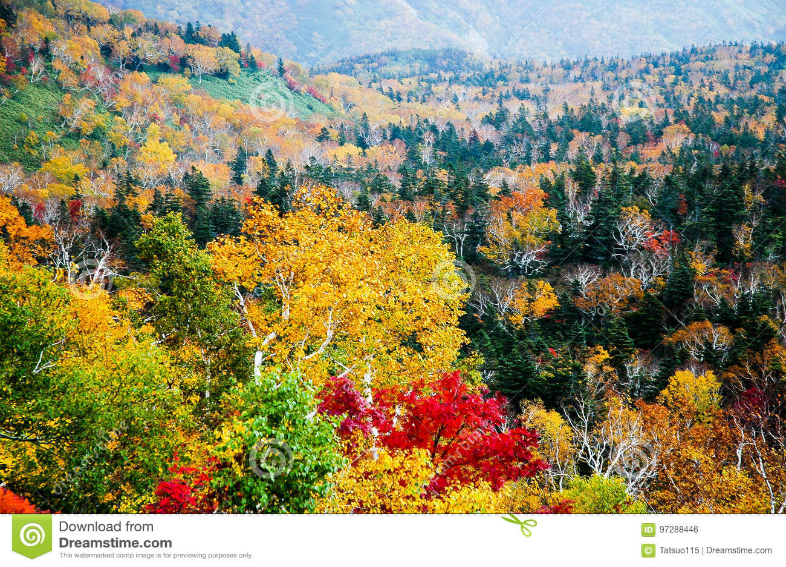 Autumn Leaves au passage de Shiretoko, Hokkaido, Japon
