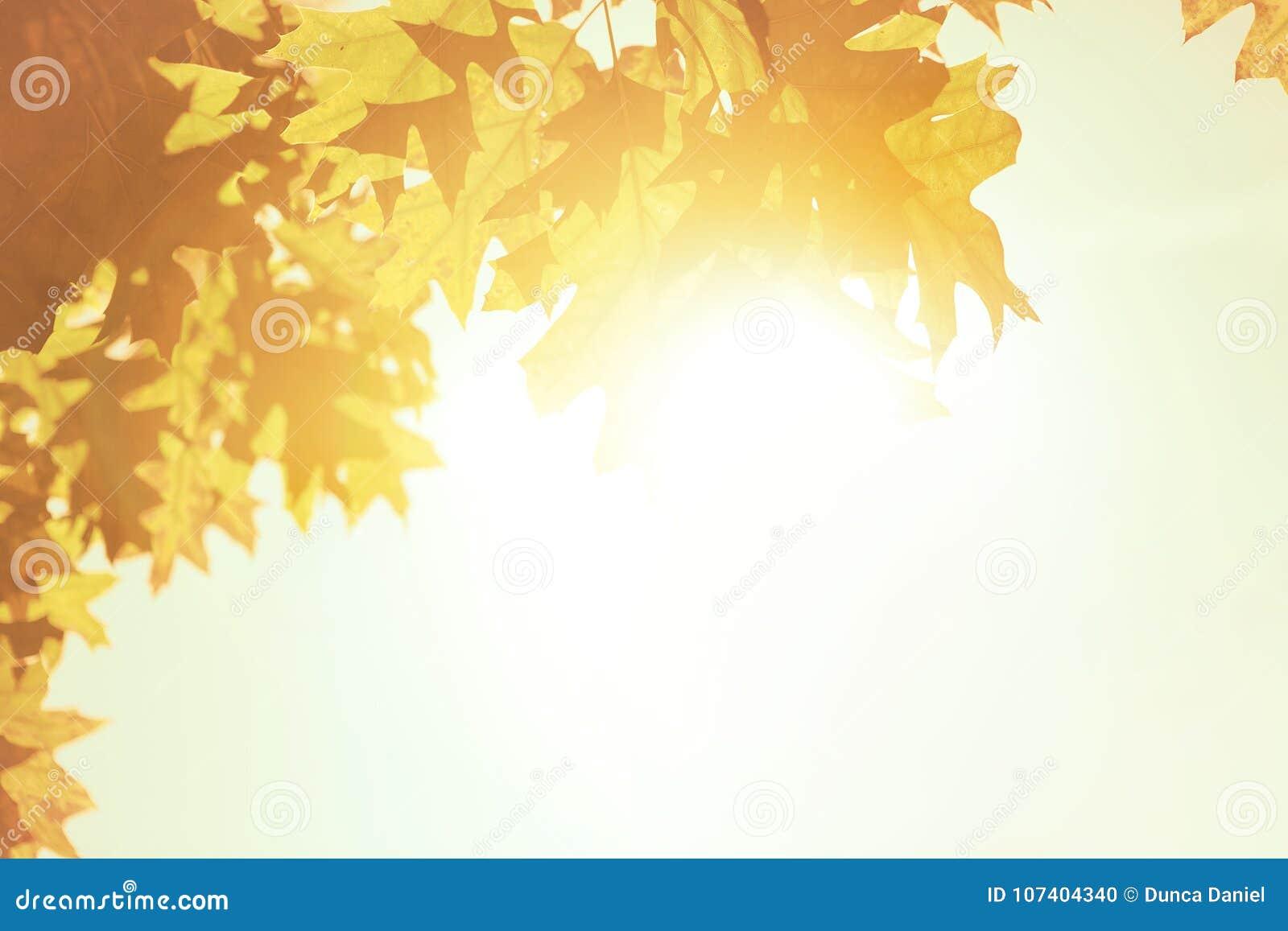 Autumn leaves background over morning sunlight