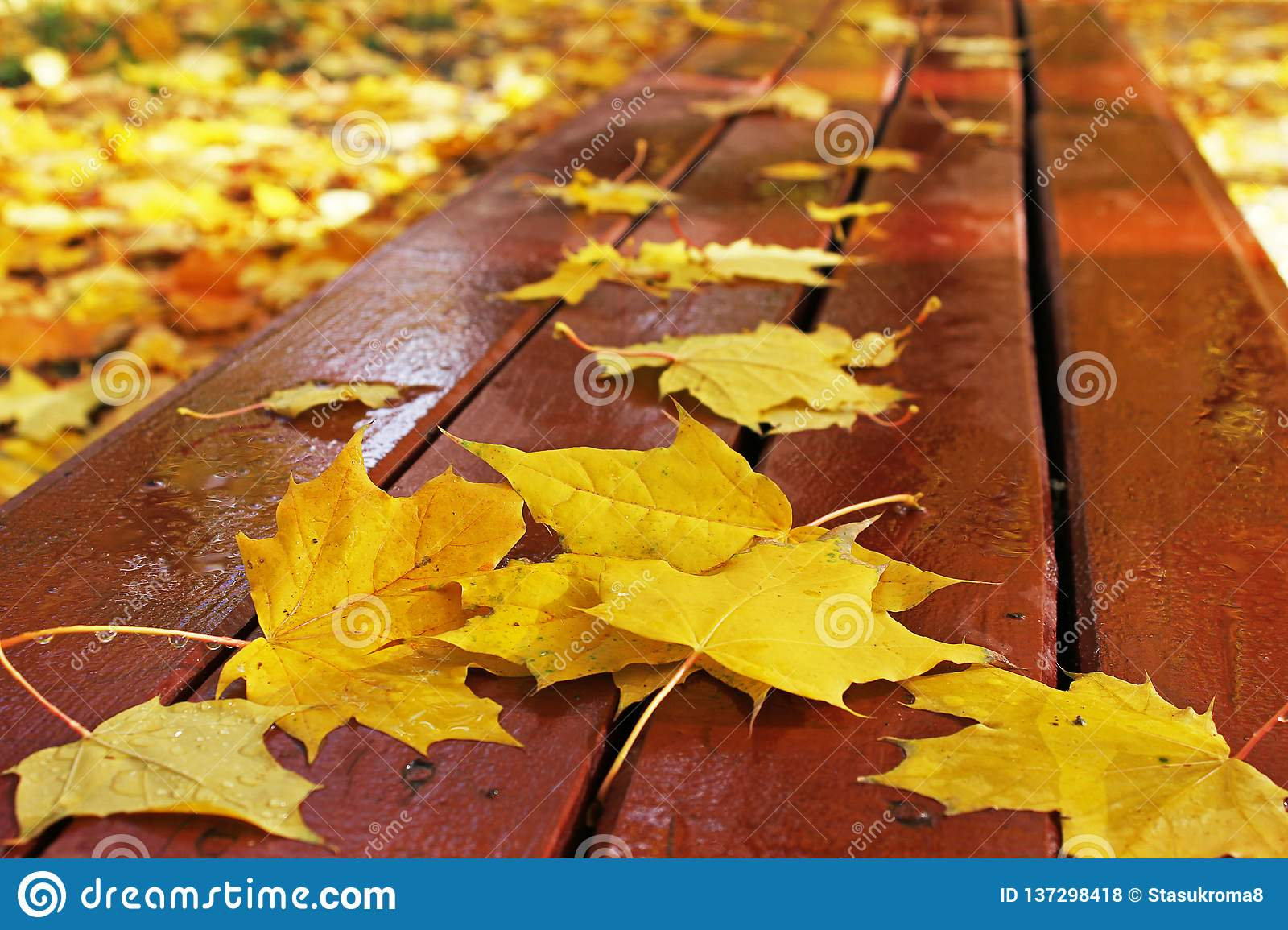 Autumn. Autumn leaves on a bench in the park