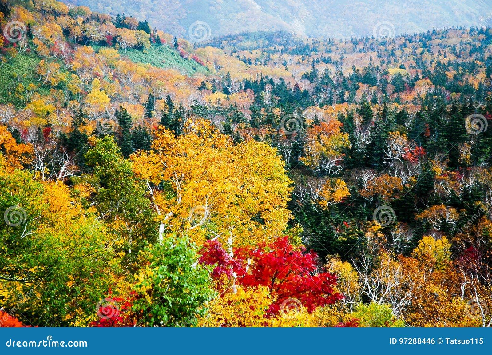 Autumn Leaves bij Shiretoko-Pas, Hokkaido, Japan