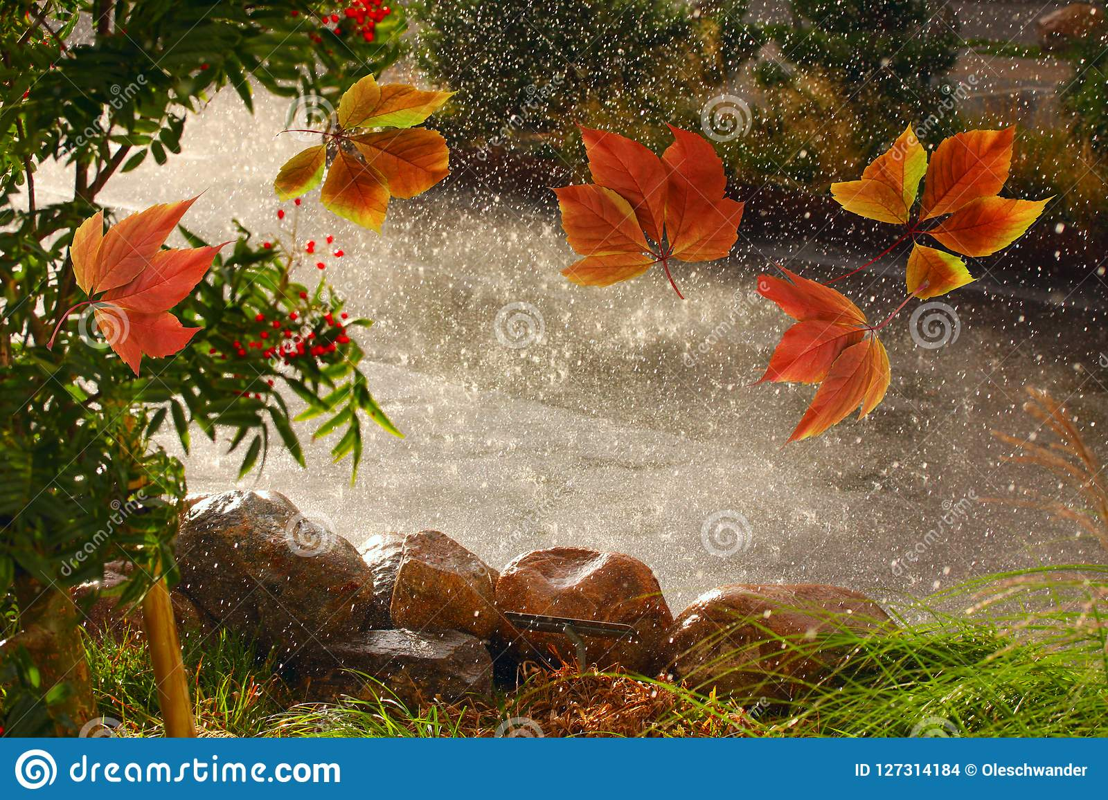 Autumn leaves blowing around in the wind i rain weather