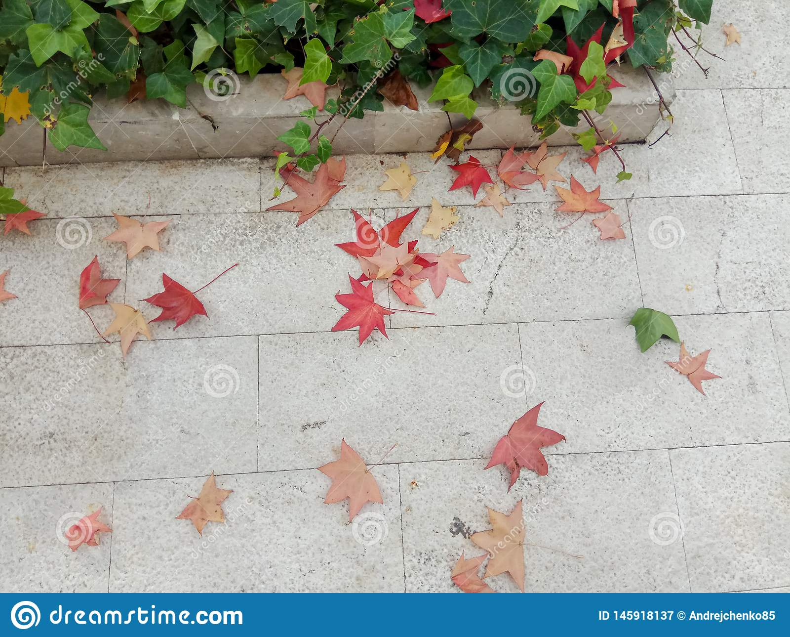 Autumn Leaves caduto giallo sopra sul marciapiede pavimentato con la vista superiore del prato inglese dell erba e di Gray Concre