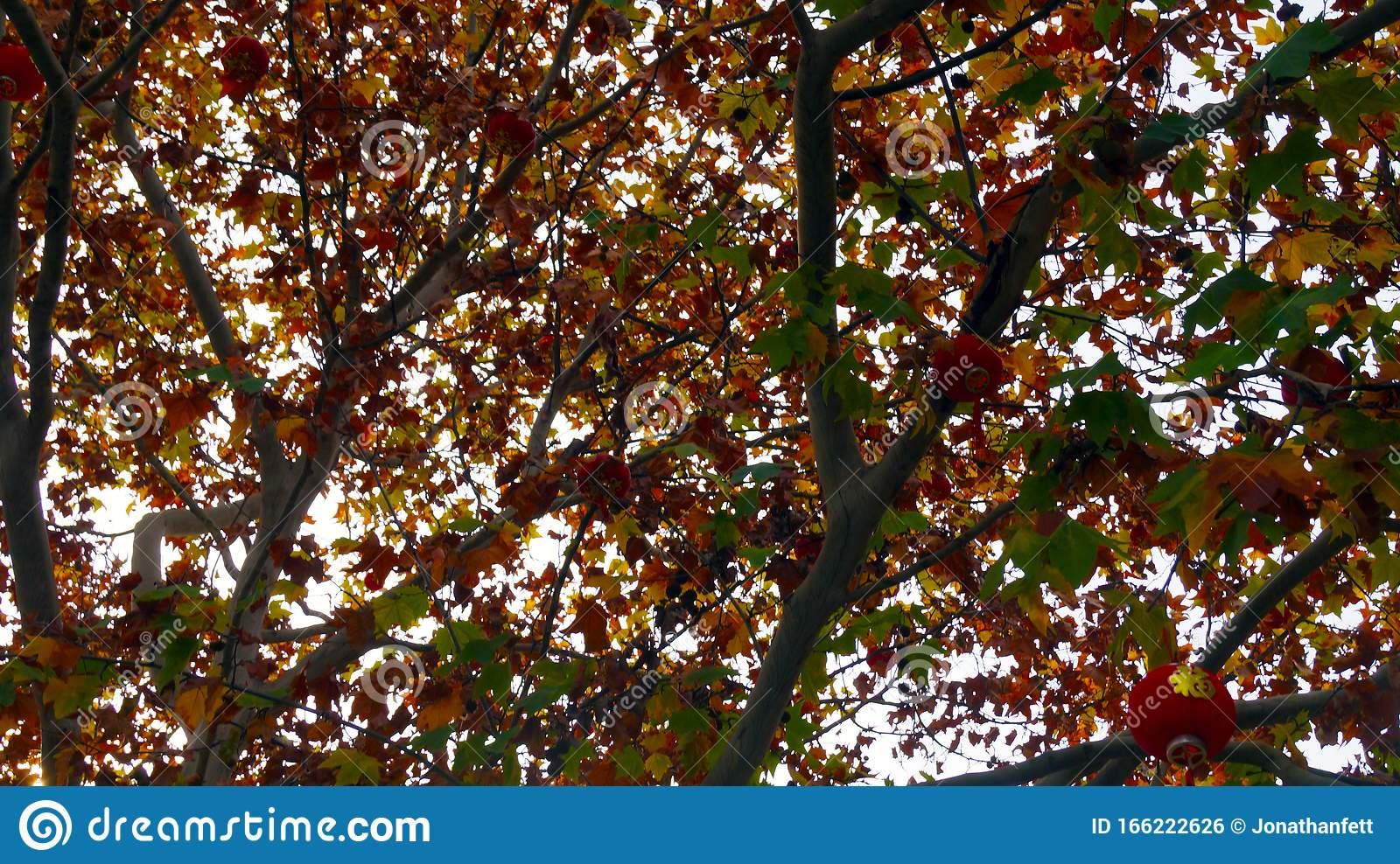 Autumn Leaves Of Chinese Tres Background Stock Photo Image Of