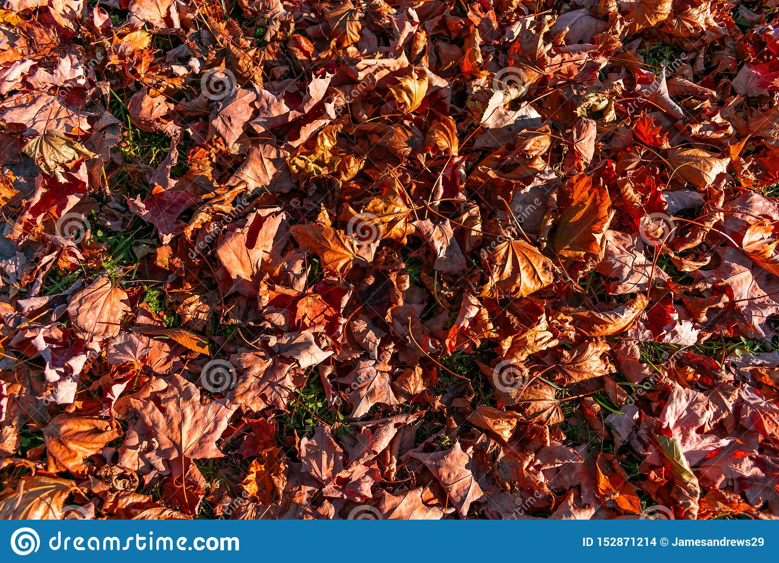 Autumn Leaves colorido secado na terra