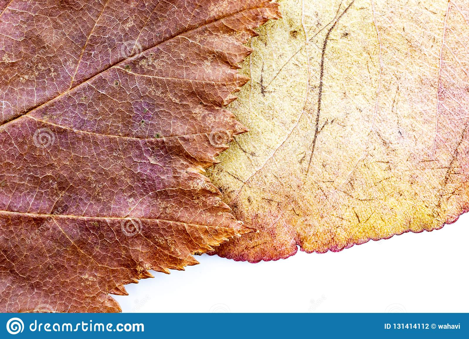Autumn leaves background composition - fawn chequers and purple-yellow pear