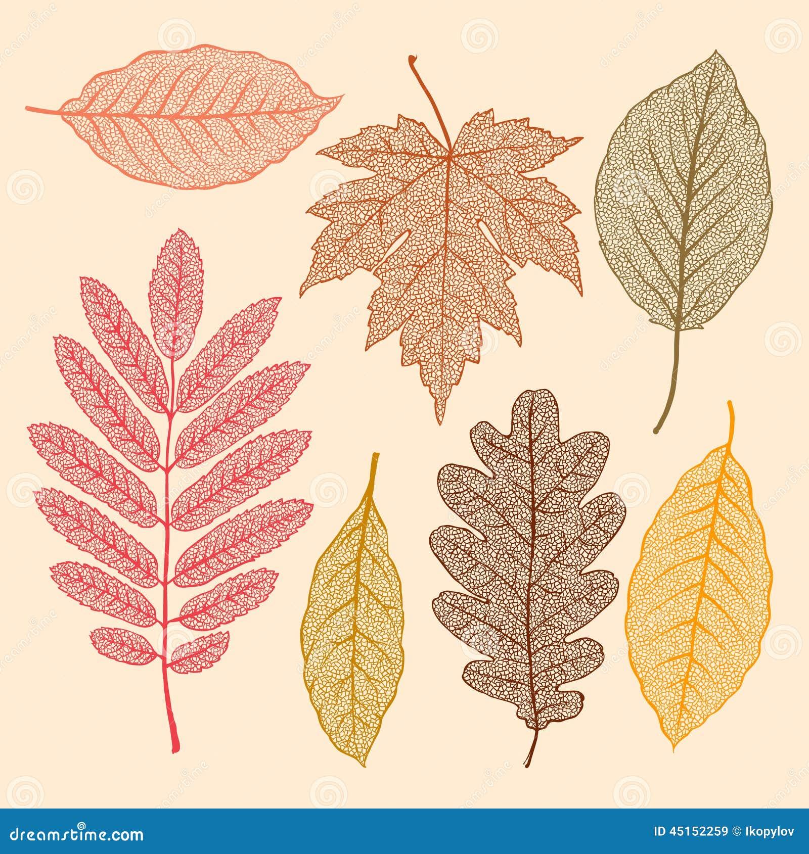 Autumn leaves, dried leaves set
