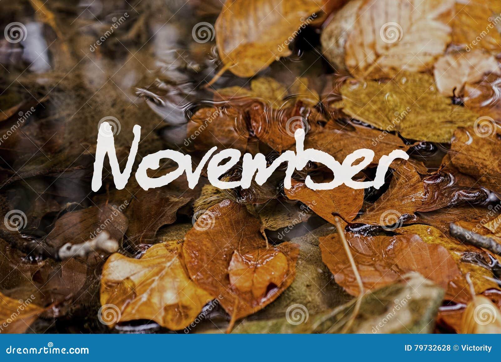 Autumn Leaves en arroyo Papel pintado del concepto de noviembre