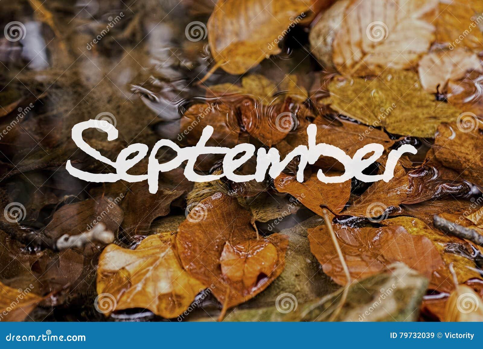 Autumn Leaves en arroyo Papel pintado del concepto de septiembre