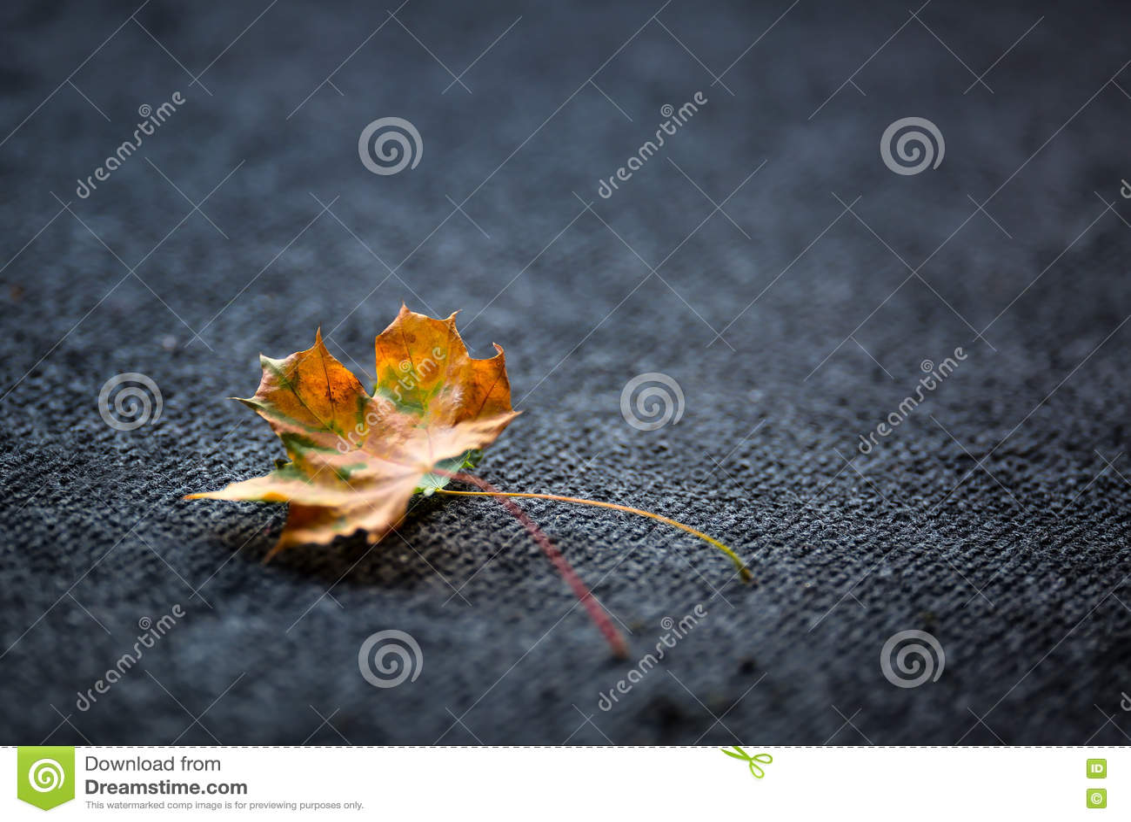 Autumn Leaves en eller två som läggas fritt på mörk matta