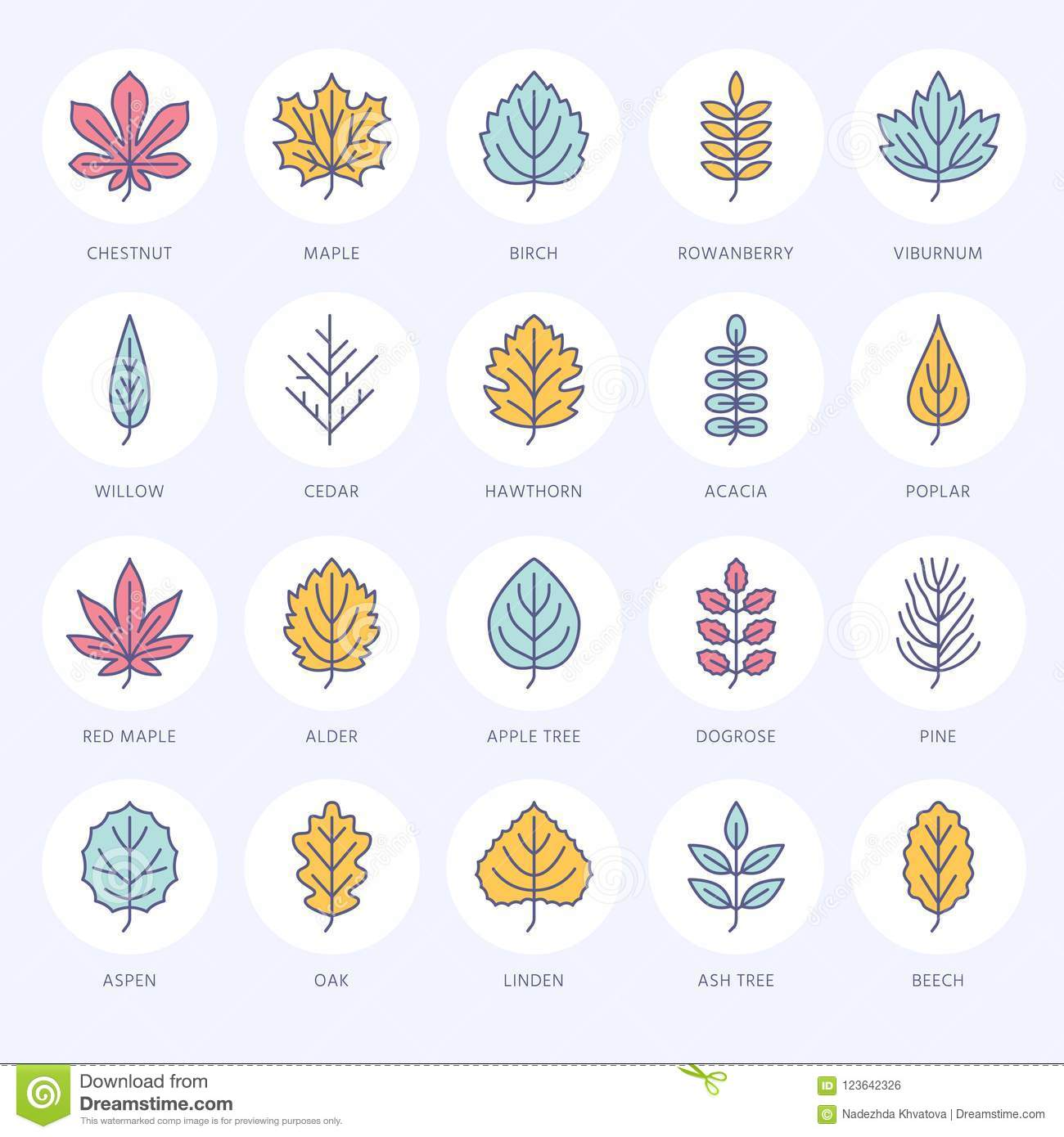 Autumn Leaves Flat Line Icons Leaf Types Rowan Birch Tree
