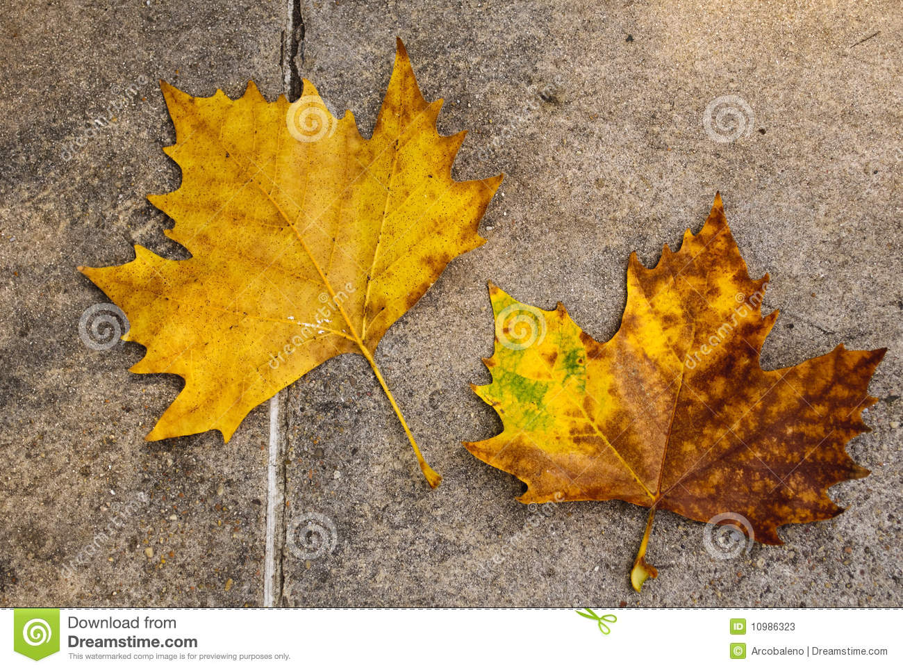 Autumn Leaves On The Floor Stock Photos Image 10986323