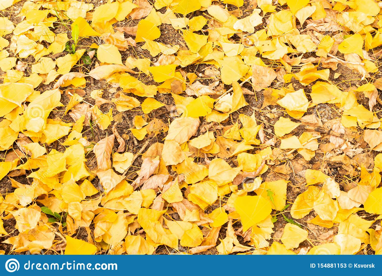 Autumn leaves in the forest on a sunny day