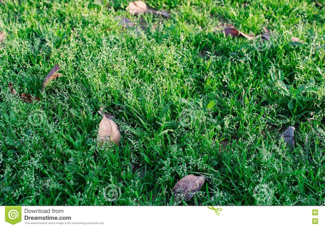 grass field from above. Download Autumn Leaves On Green Grass Field, View From Above Stock Photo -  Image Of Grass Field From Above