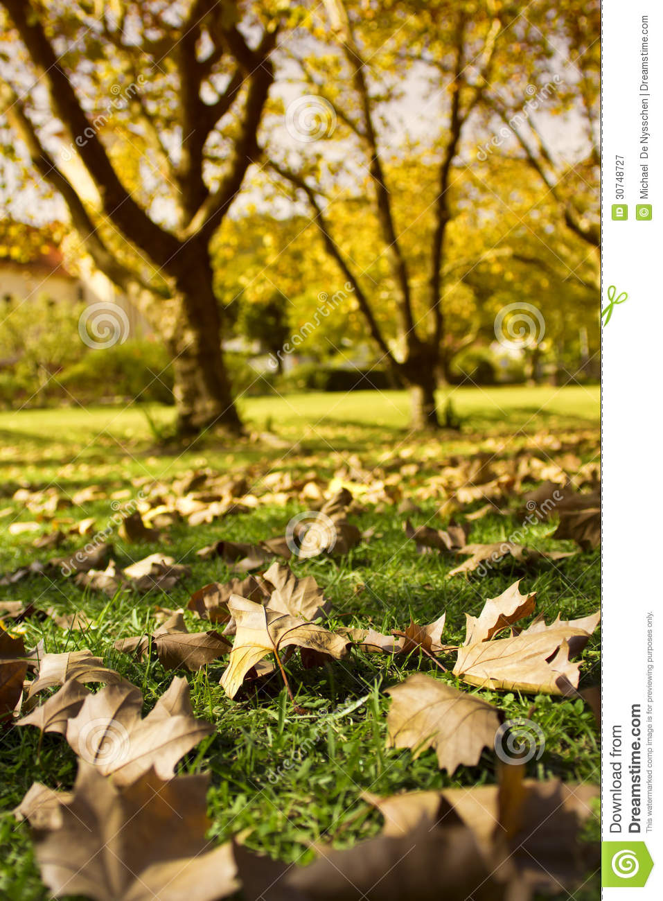 Autumn leaves on green lawn with trees in background