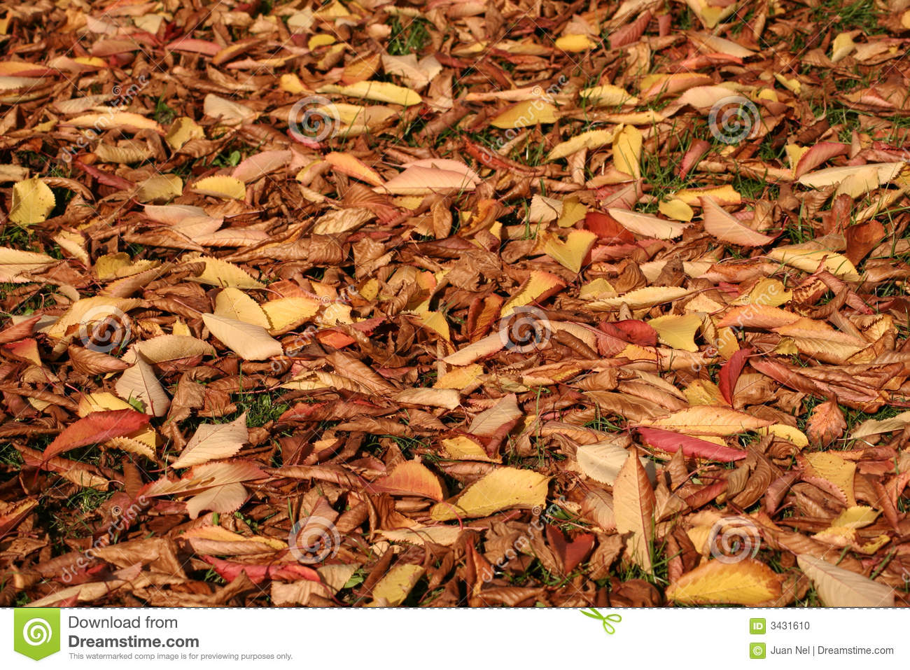 autumn leaves on ground stock photo image of colourful 3431610