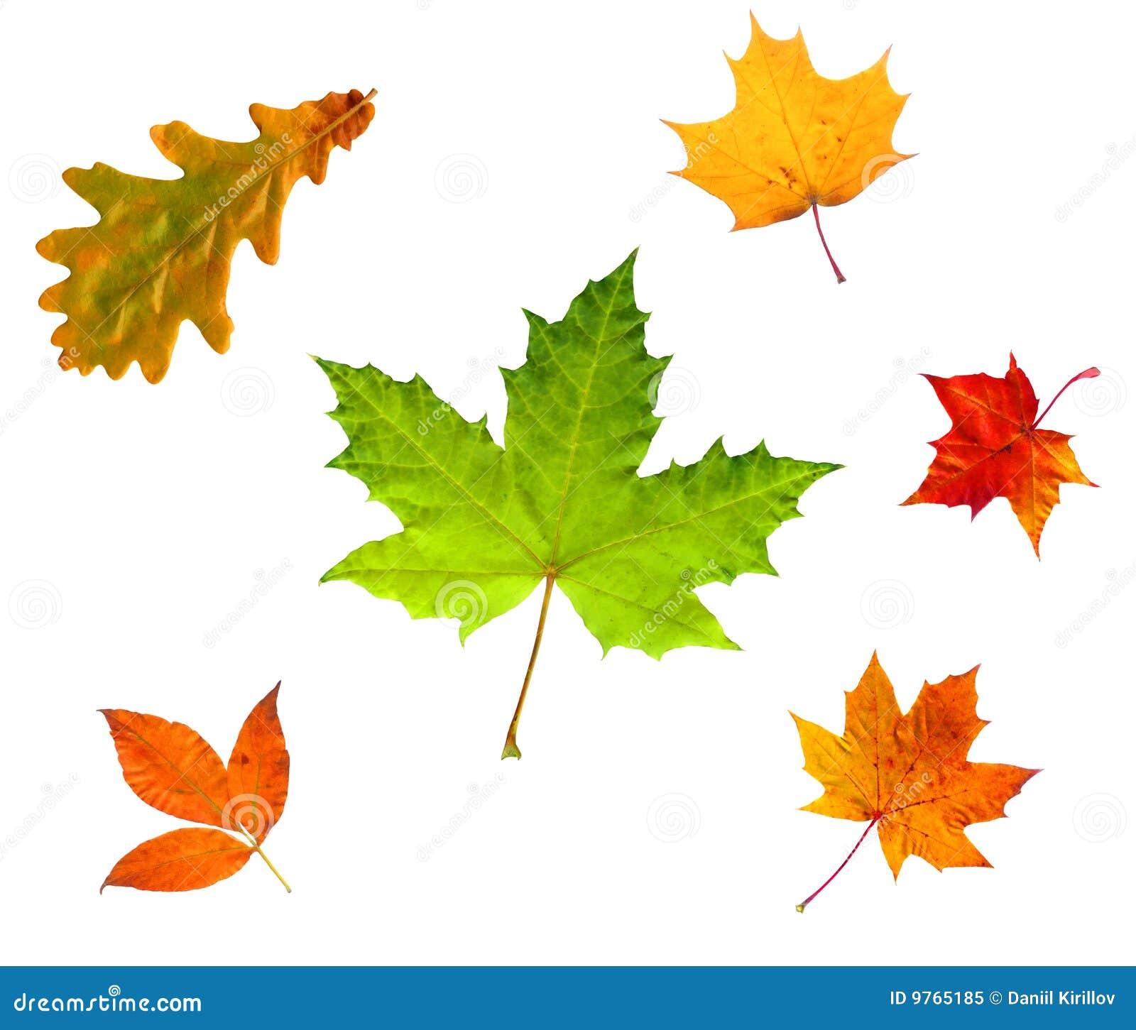 Autumn leaves isolated on Autumn Leaves
