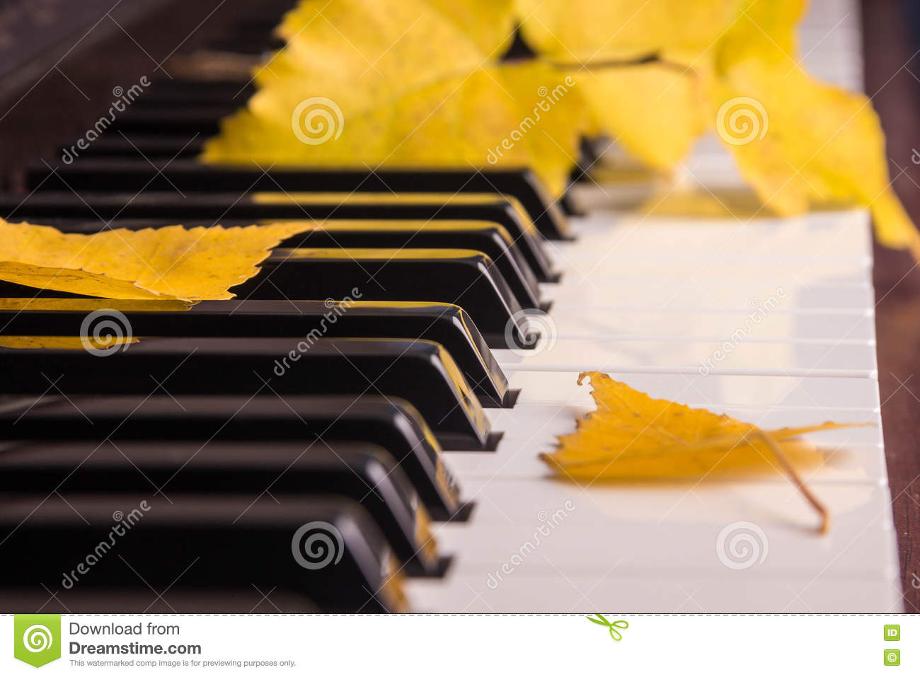Autumn Leaves The Keys On Piano Stock Image - Image of
