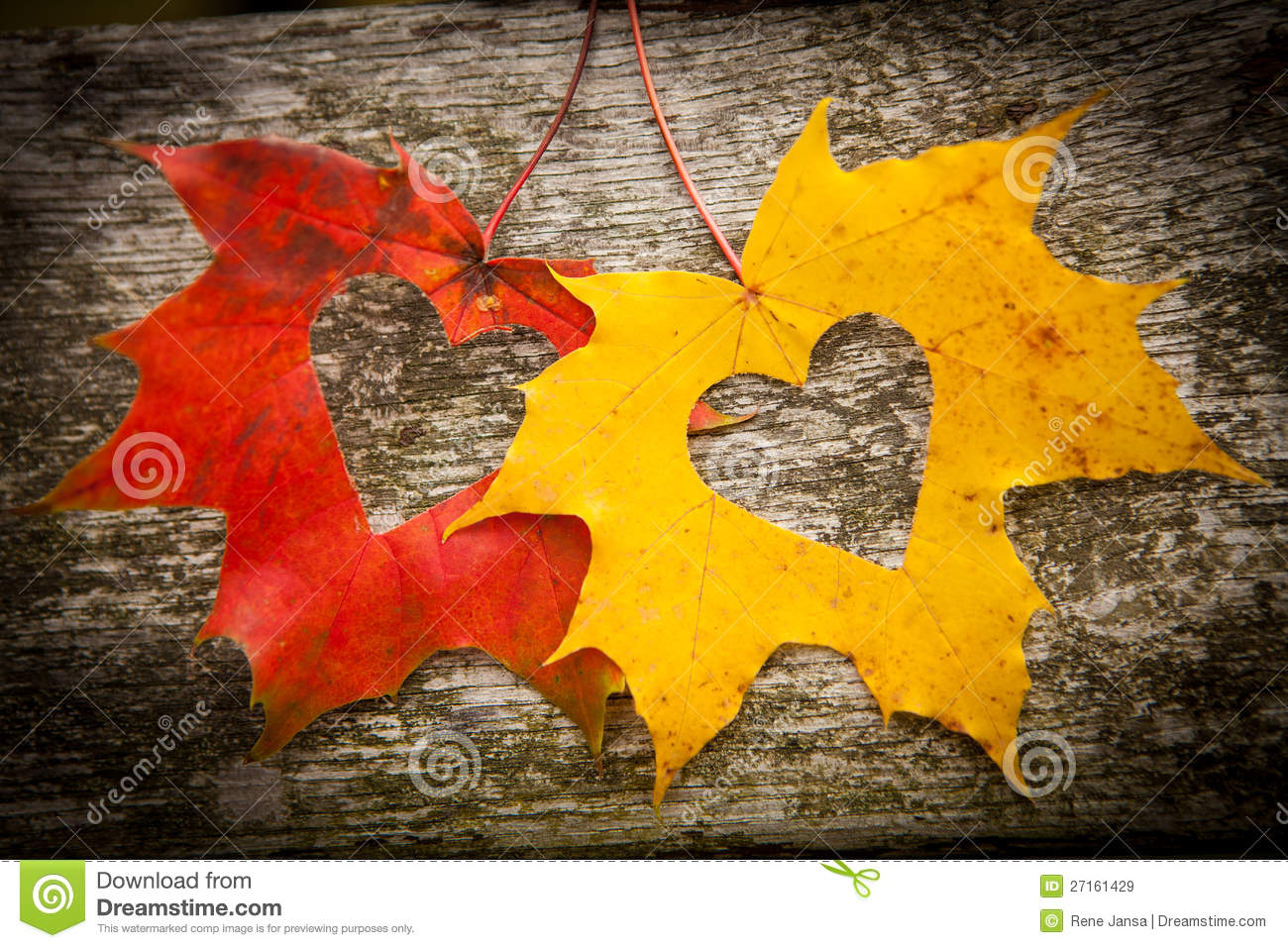 autumn leaves and love hearts stock image image 27161429
