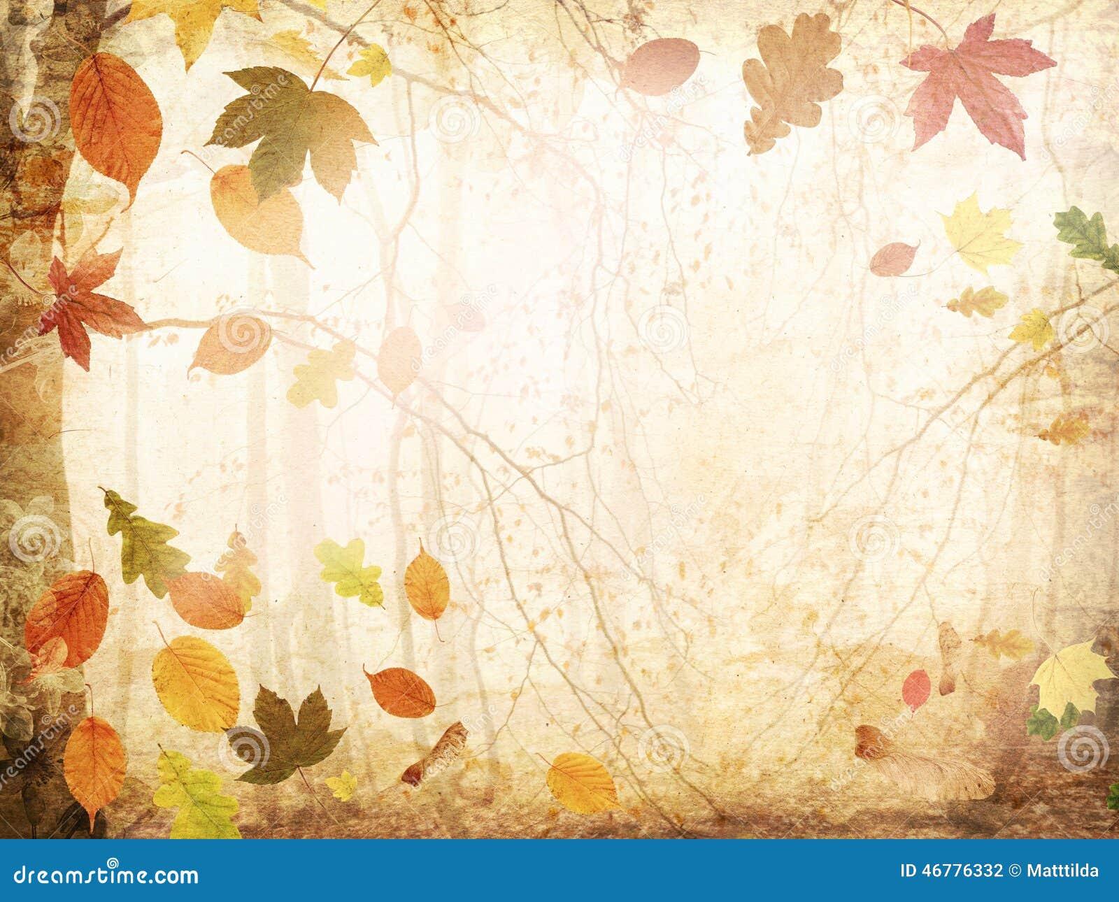 Autumn Leaves Stock Photo Image Of Foliage Leaves
