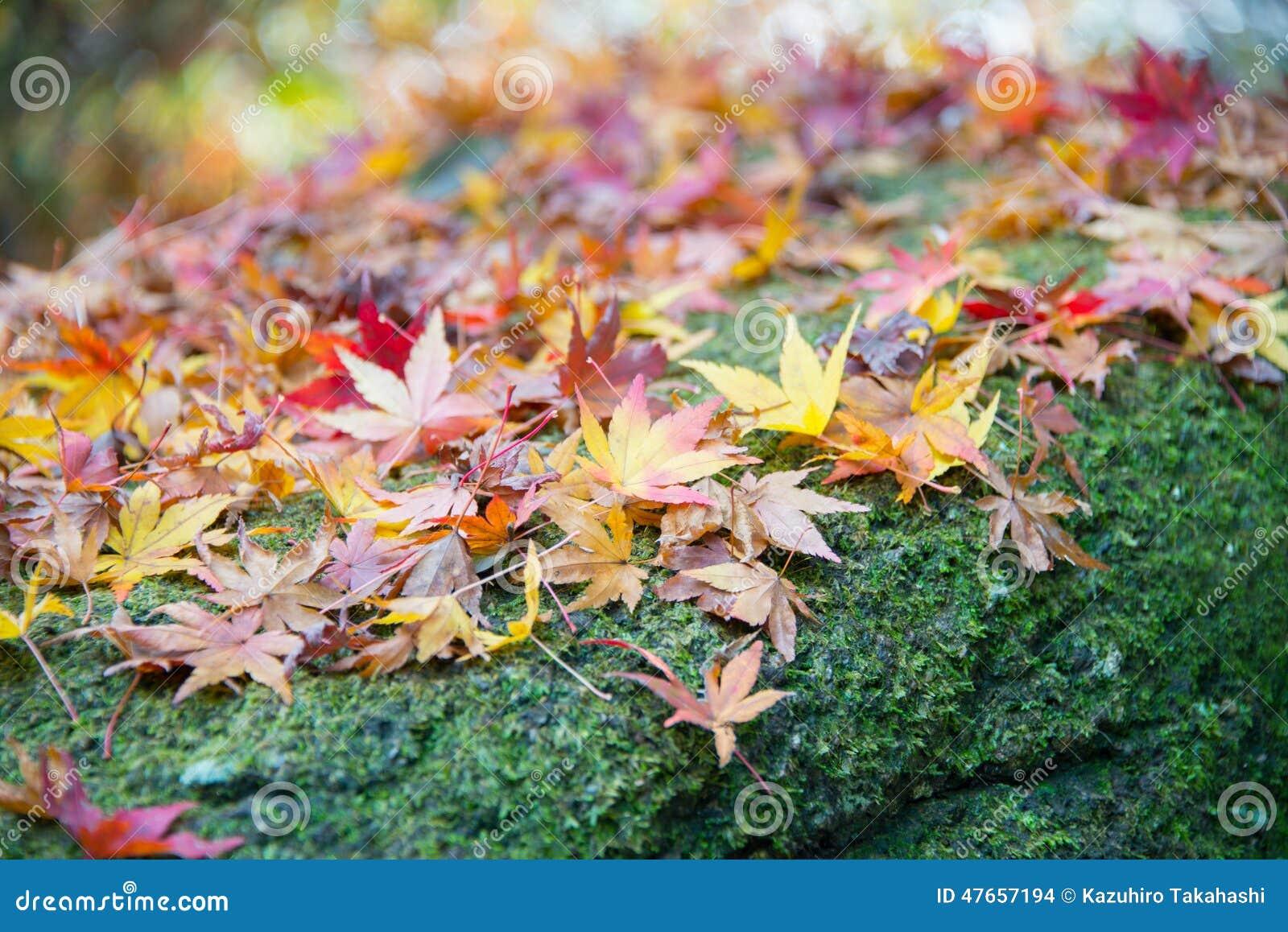 Autumn Leaves op de Bemoste Rots