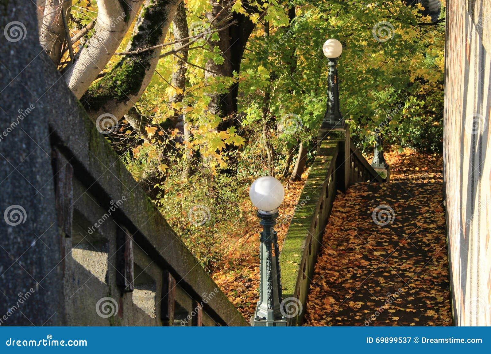 Autumn Leaves op een Weg