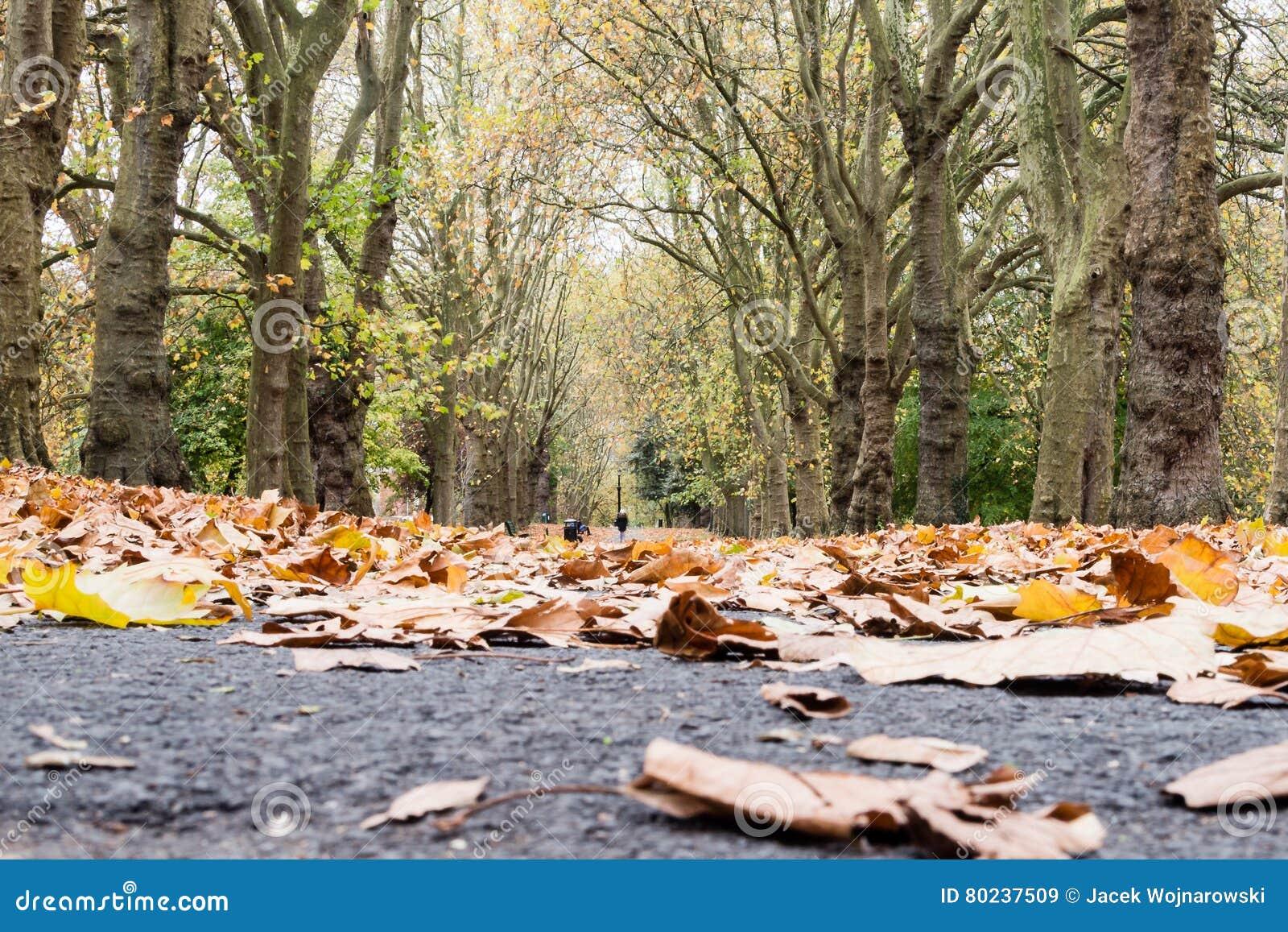 Autumn Leaves Pathway